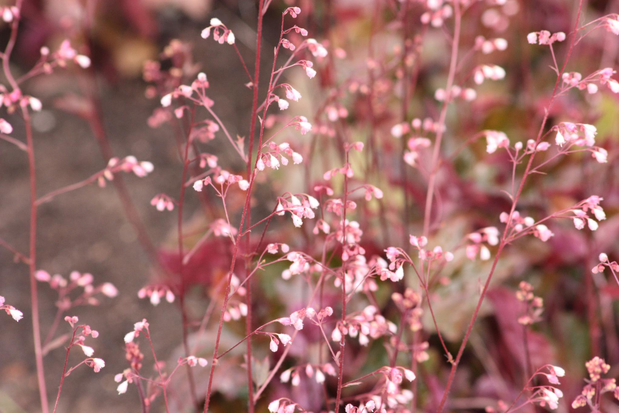 Small pink flowers by karinbelinki