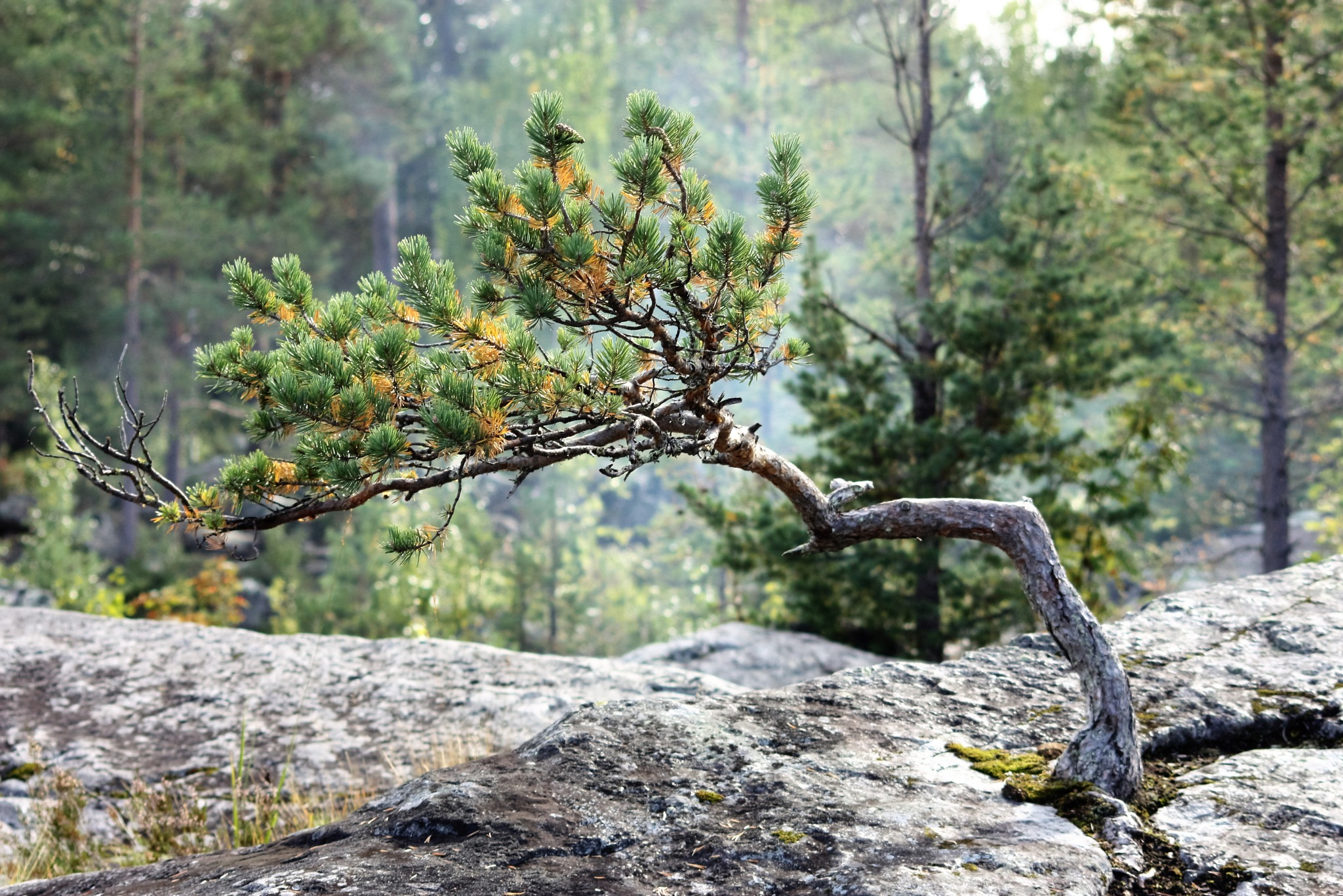 Tree by karinbelinki
