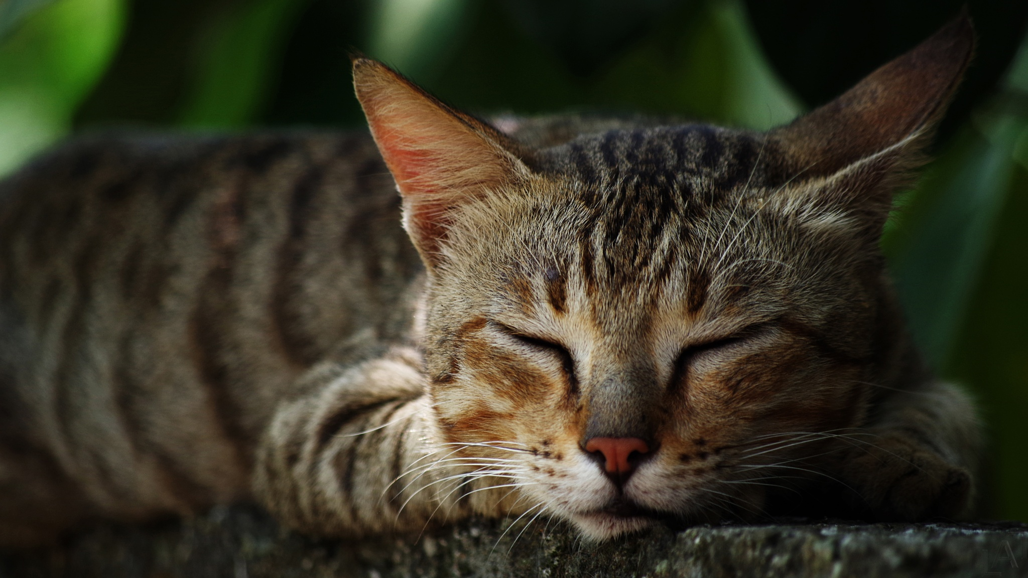 Sleeping Beauty by Lal Pic ;)