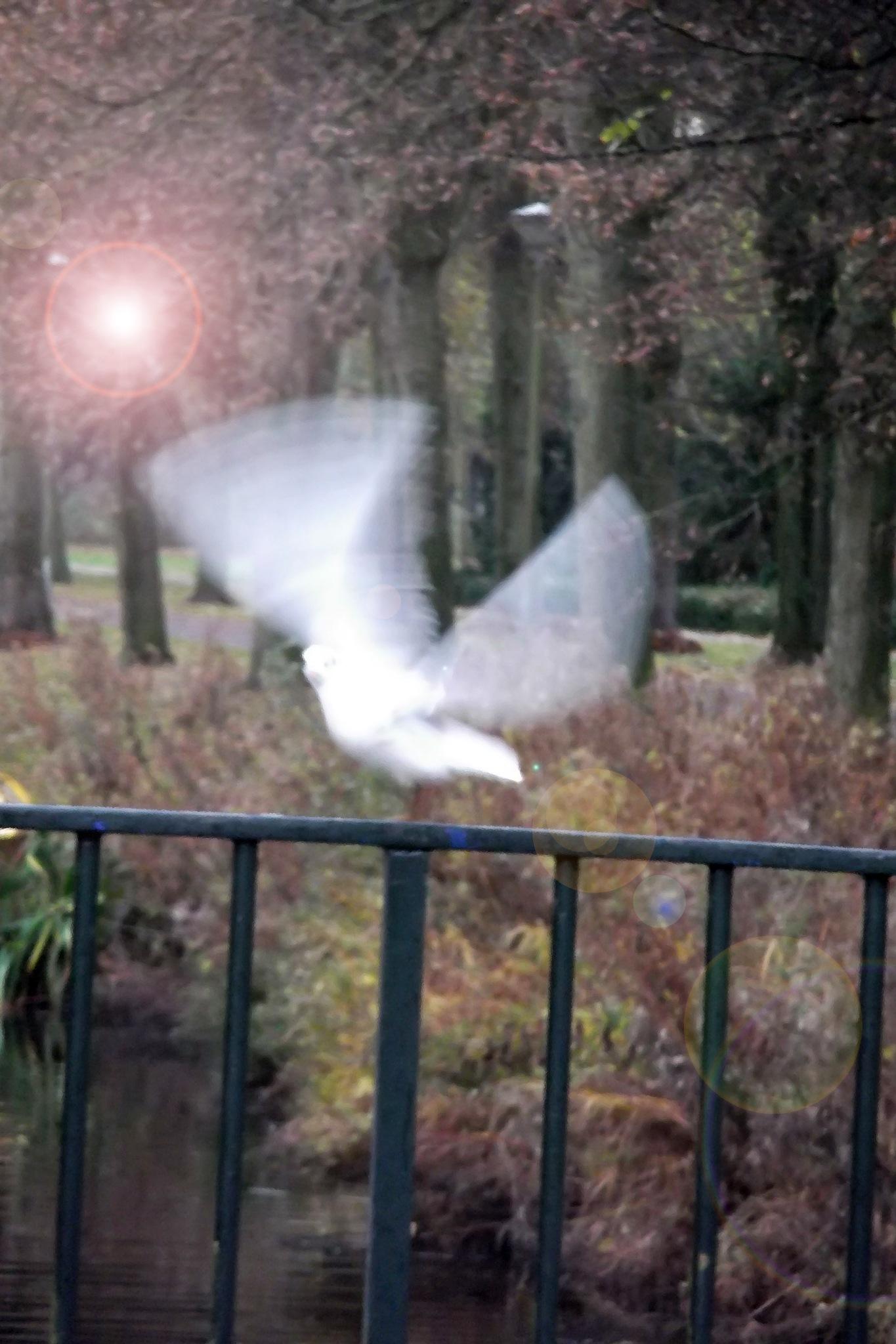 Fly by Massoud Memar