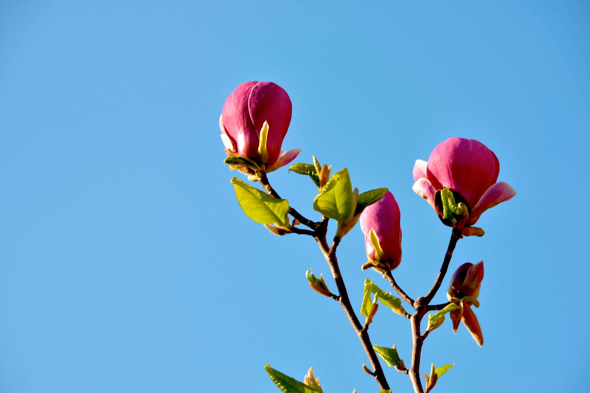Flowers in sky! by Massoud Memar