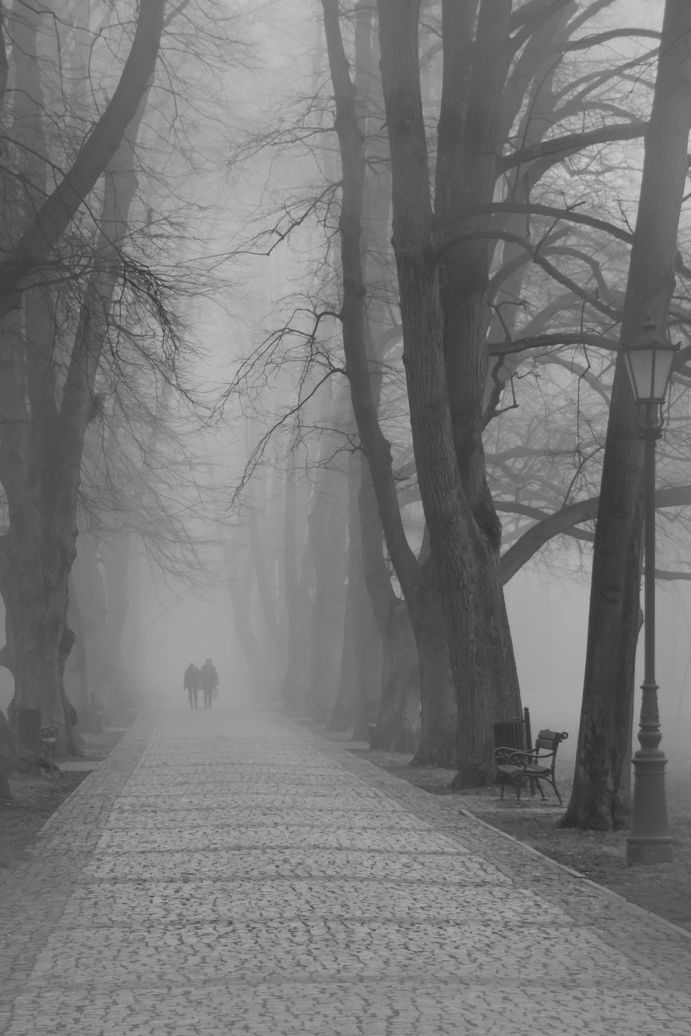 In to fog by WiSt
