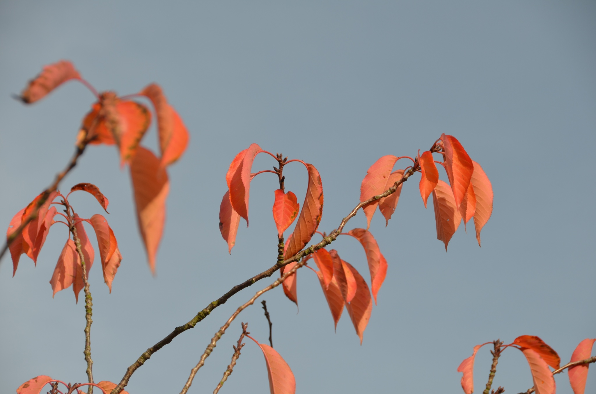 leaves by handige.vriend