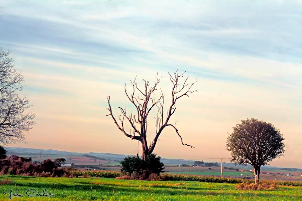 Paisagem Rural by leao.cardoso