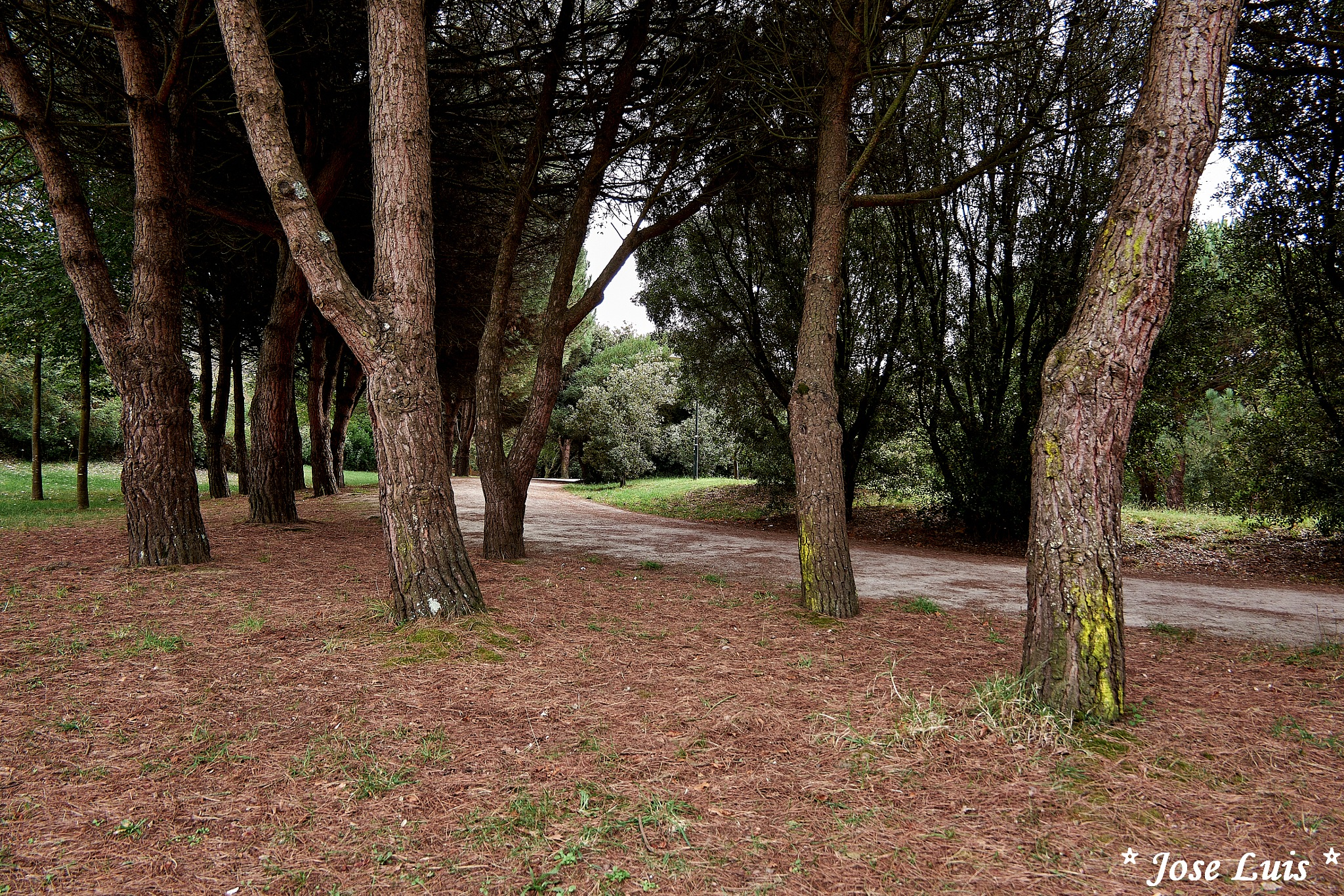 Parque da Cidade by jose.downlord