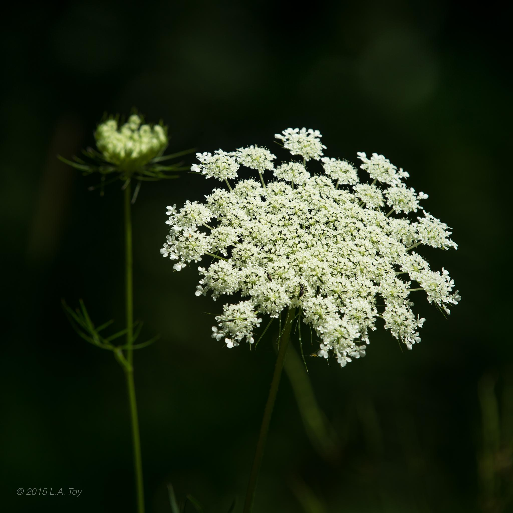 Natures Lace by L.A. Toy