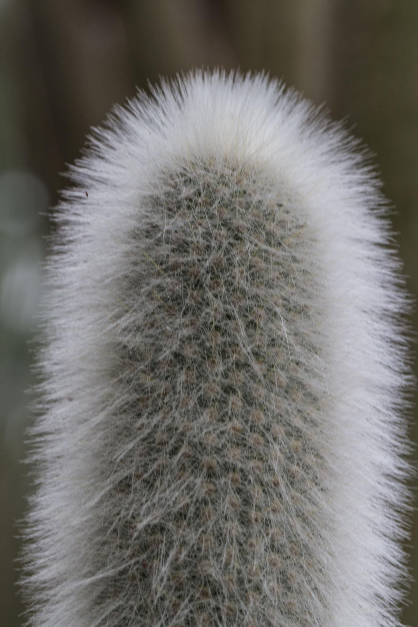 Photo in Macro #cactus