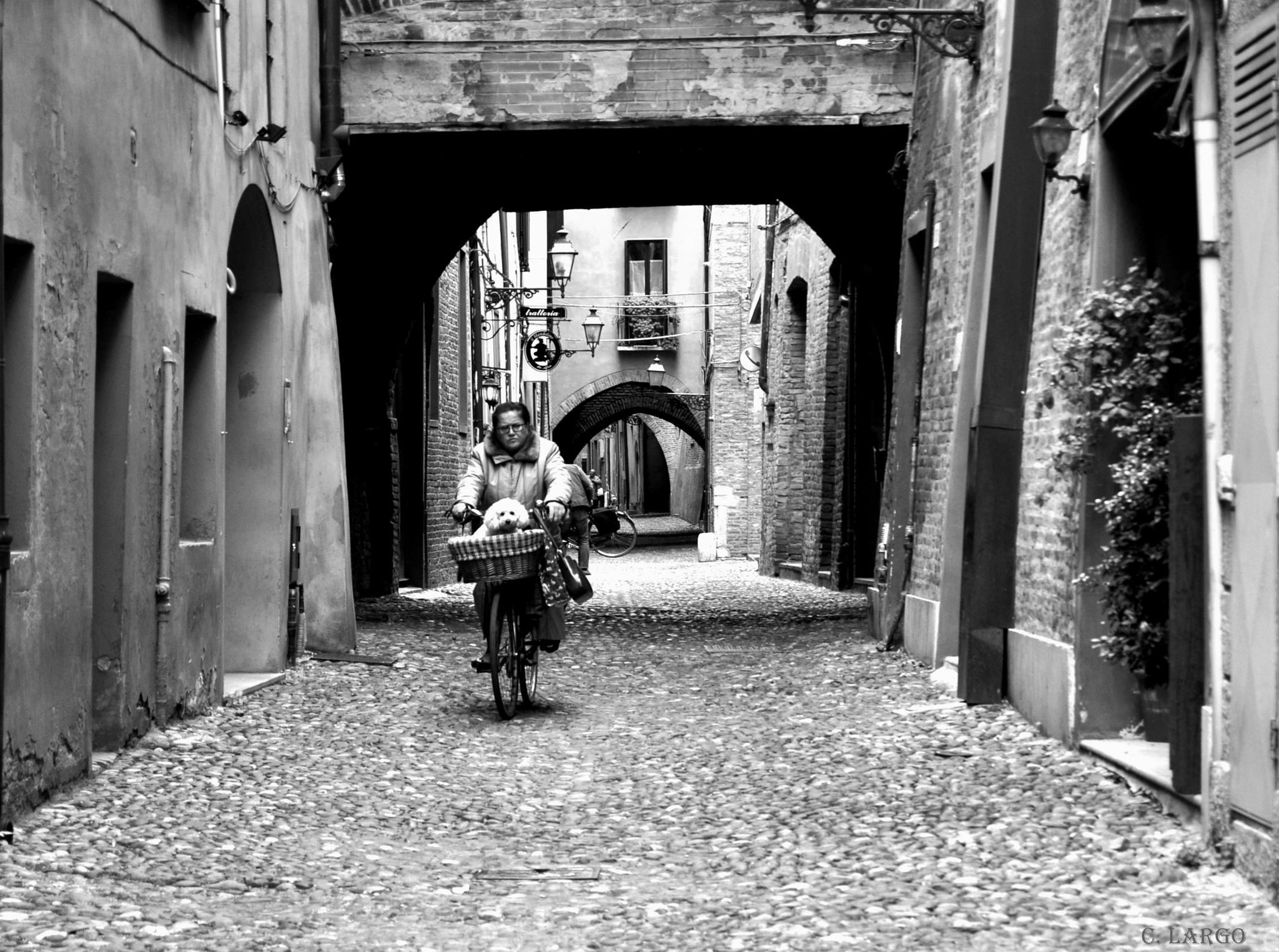 A dog in a bike by carmenlargo13