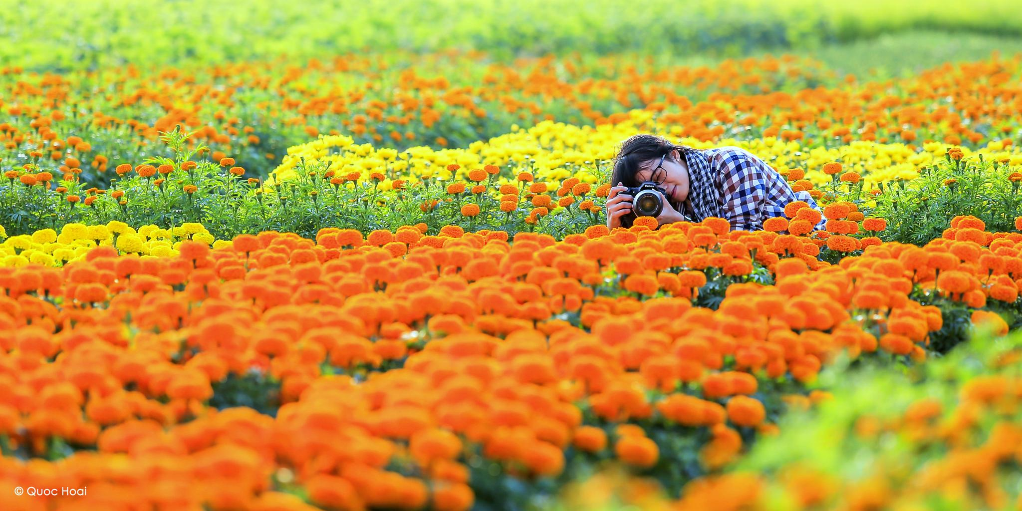 The flowers  by Michael Hoai