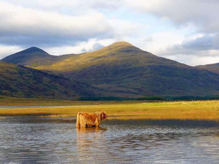 Isle of Mull,  Scotland  by mark.appleton1