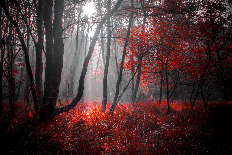 Vampire Woods by Wanja Wiese