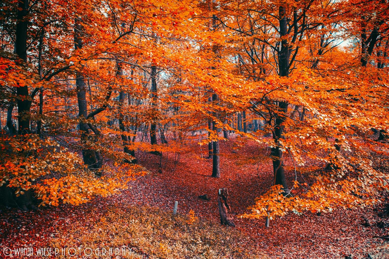 apelsīnu mežs by Wanja Wiese