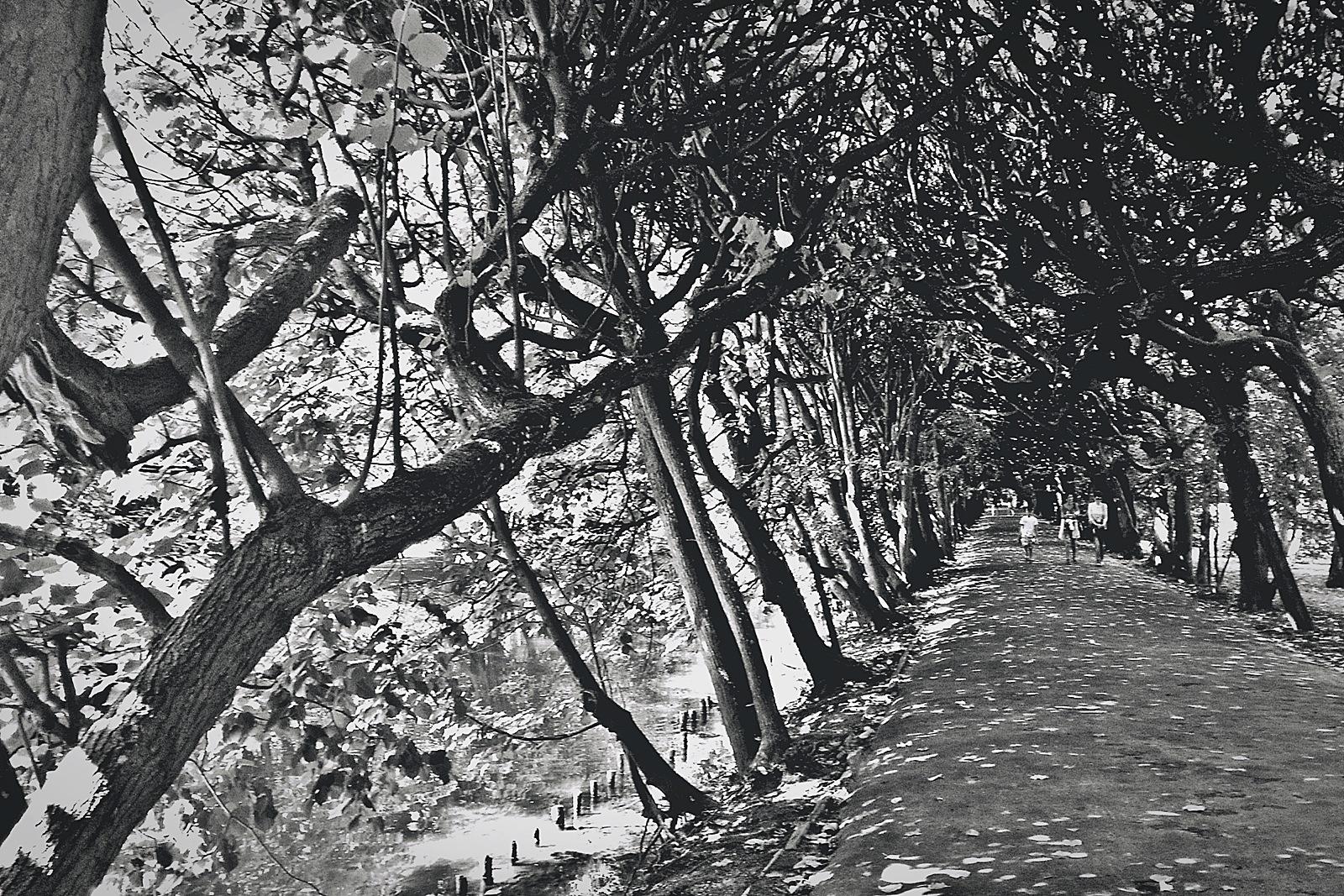 walking down .. by ewa_no