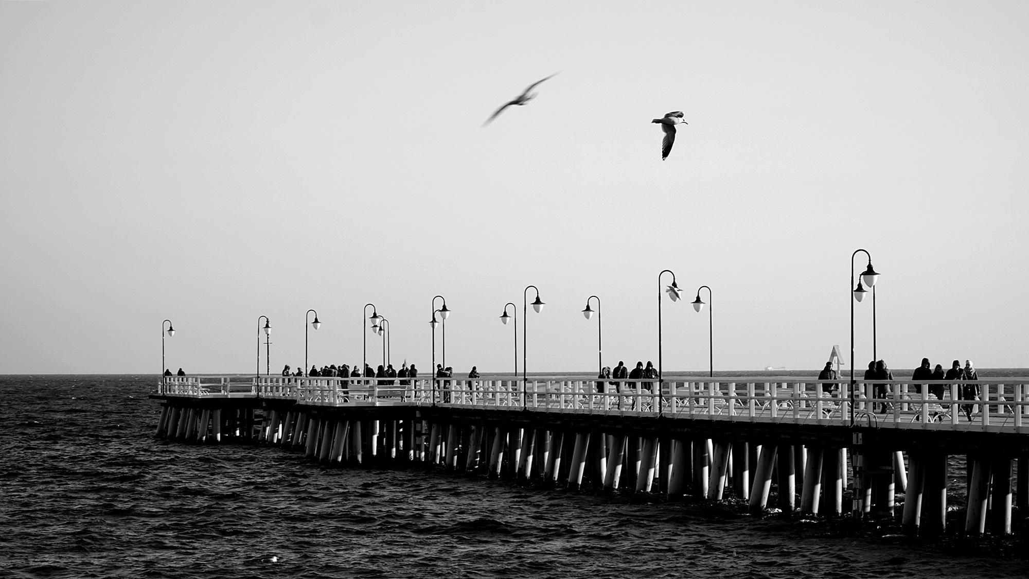 bird .. 2 by ewa_no