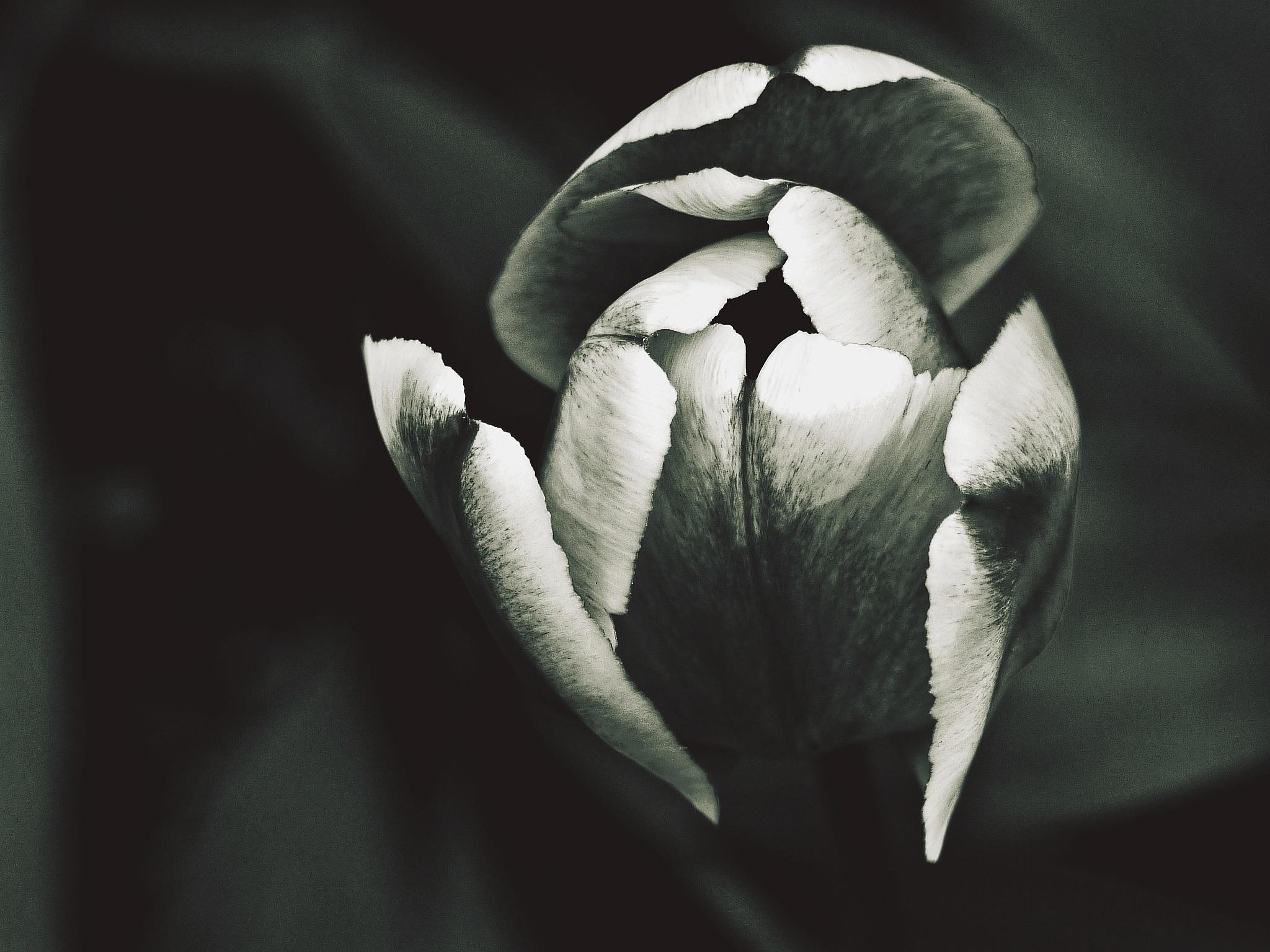 beauté en épanouissement .. / blooming beauty ..  by ewa_no