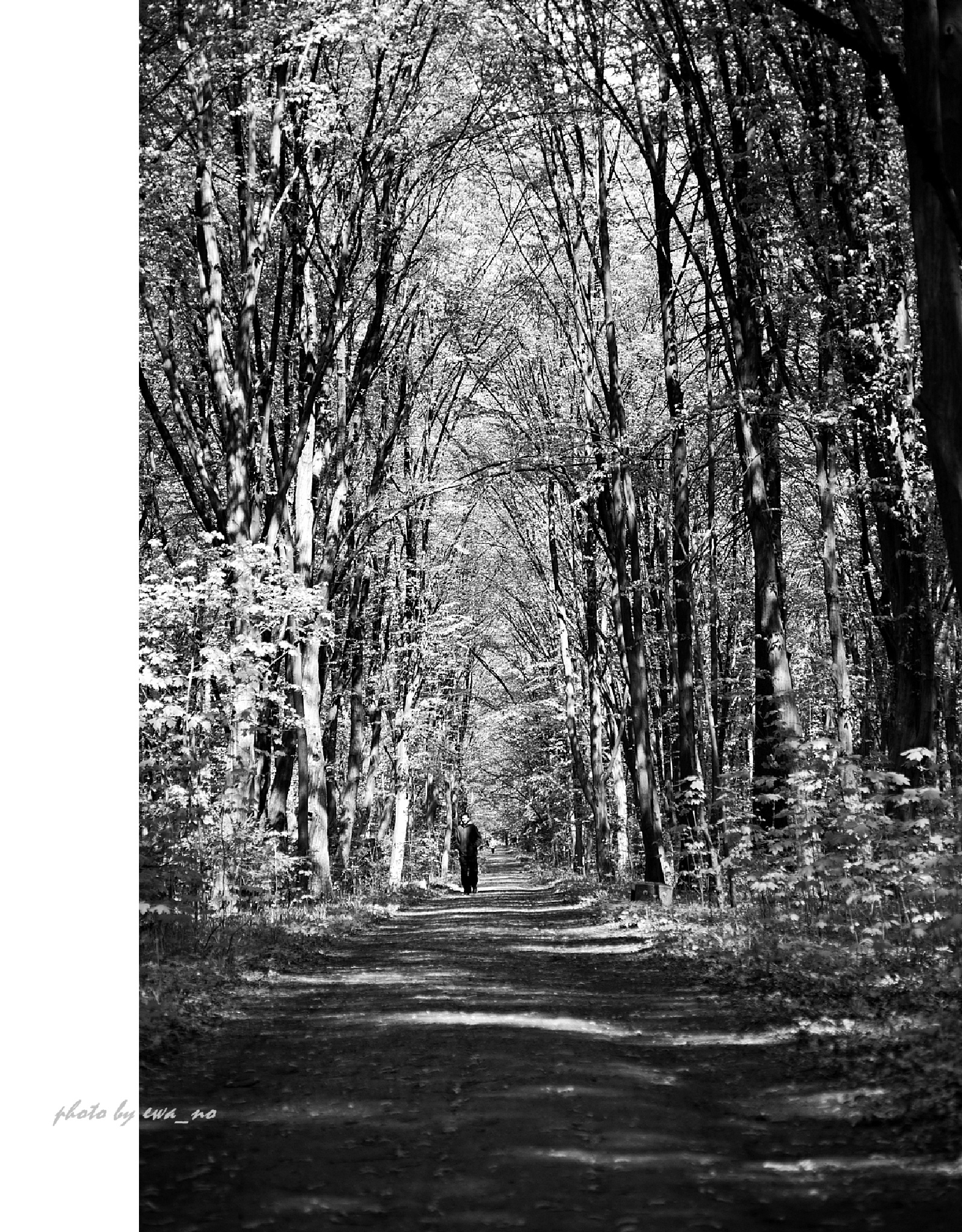 Photo in Black and White #walk #woods #black&white #street photo #man #thinking