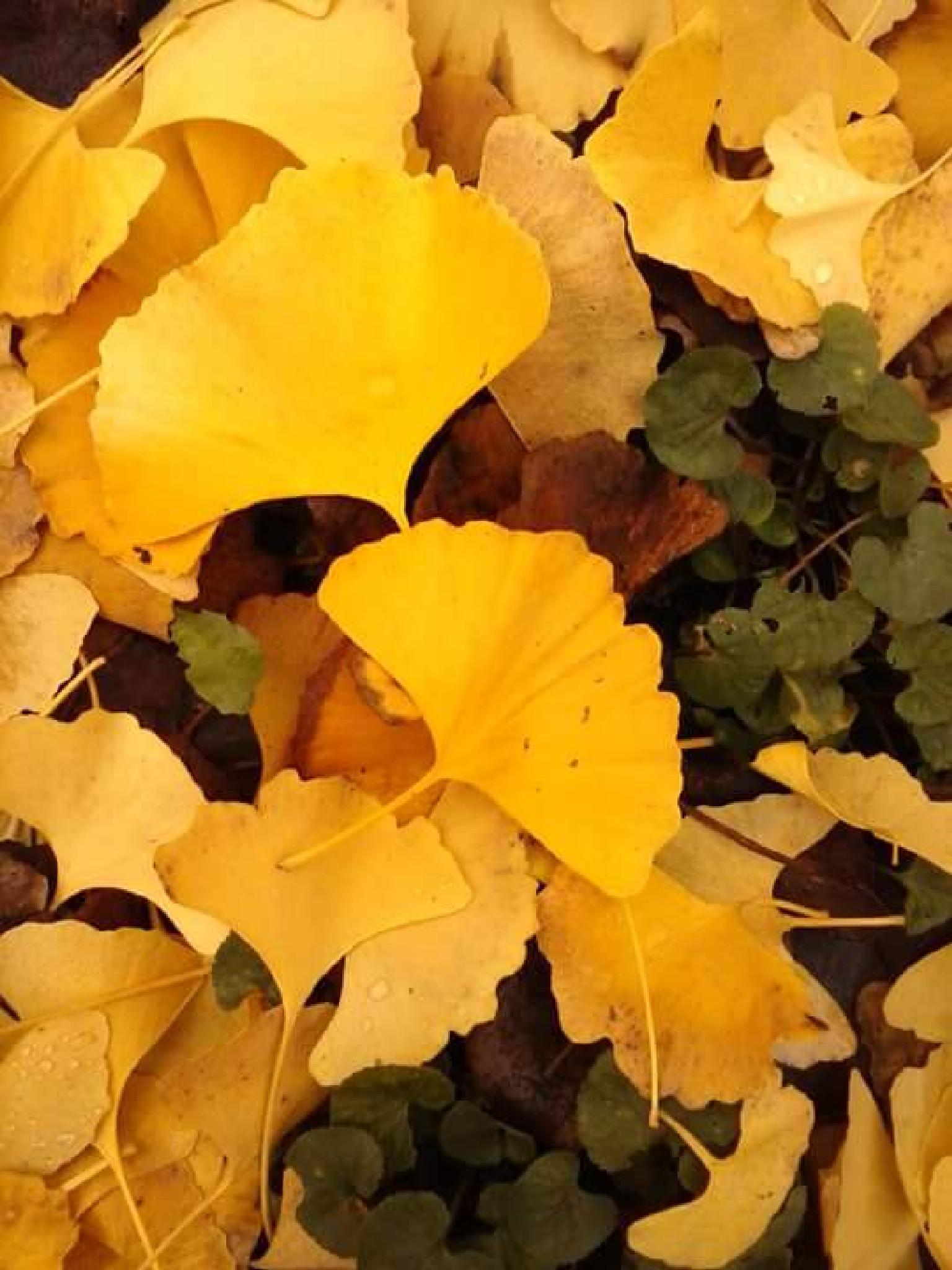 Yellow colours of tired leaves by Paolo Pasquali