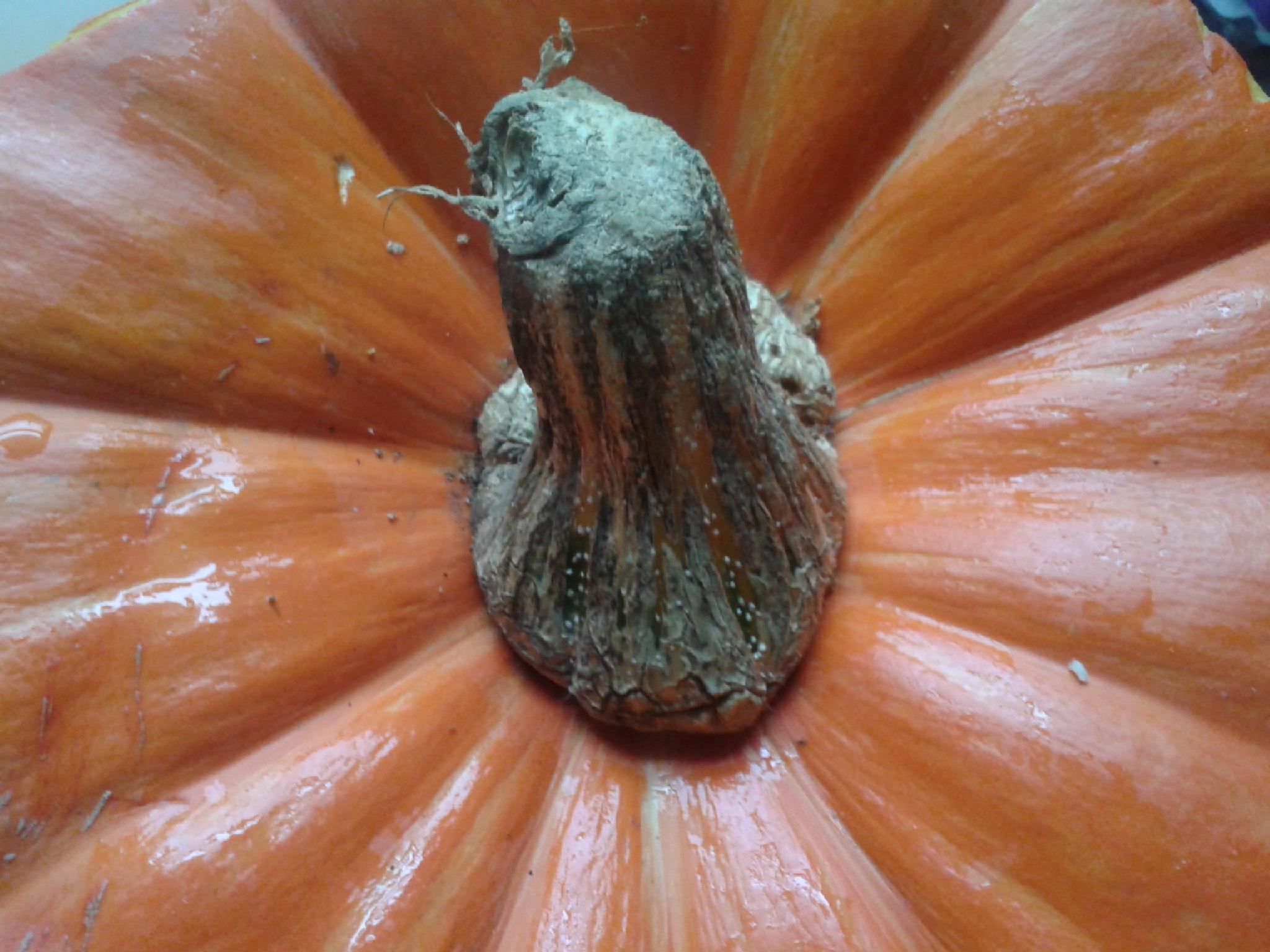 Photo in Random #pumpkin #fall #carving #for the seeds