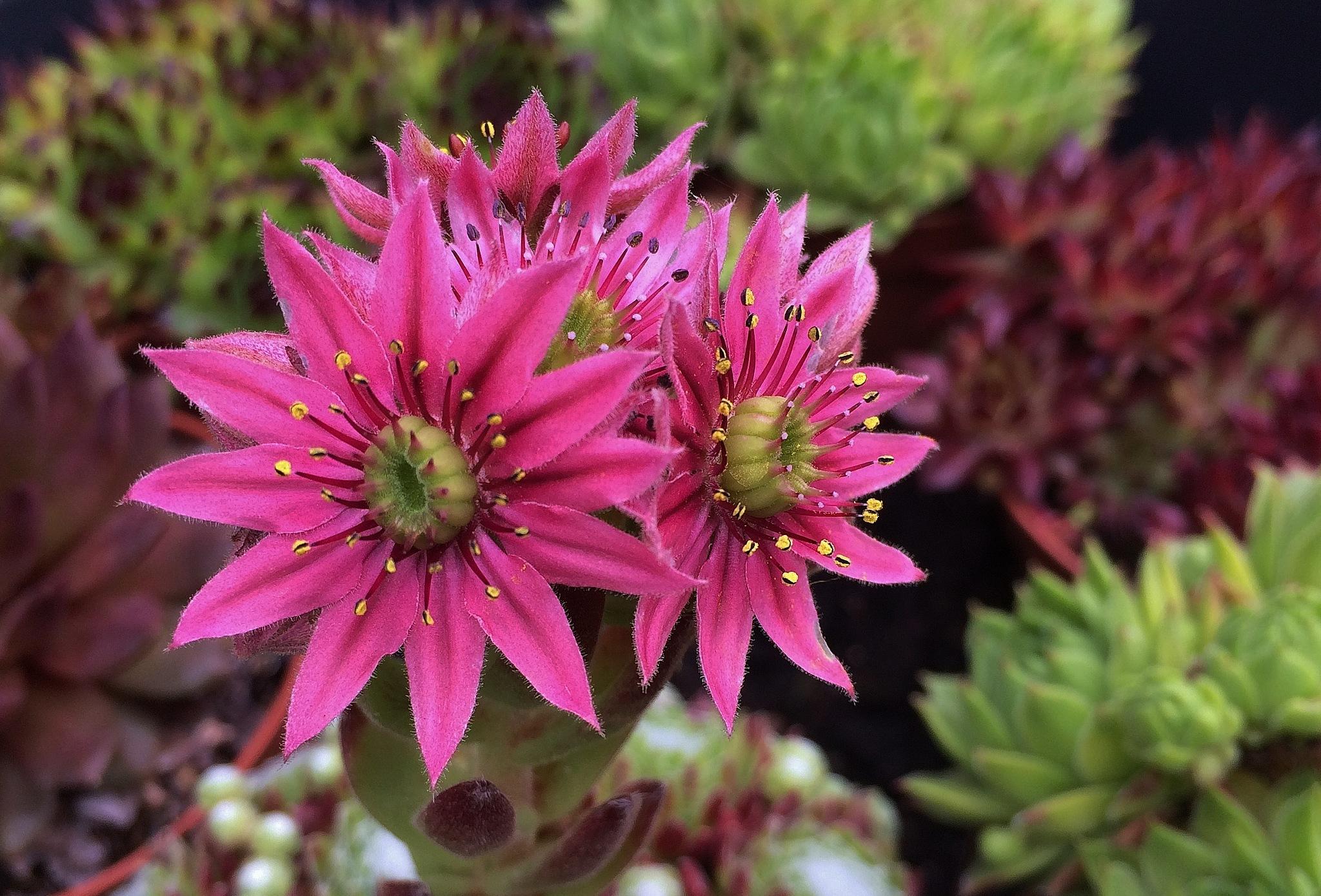 """ Flower in the garden "" by Per Göthe"