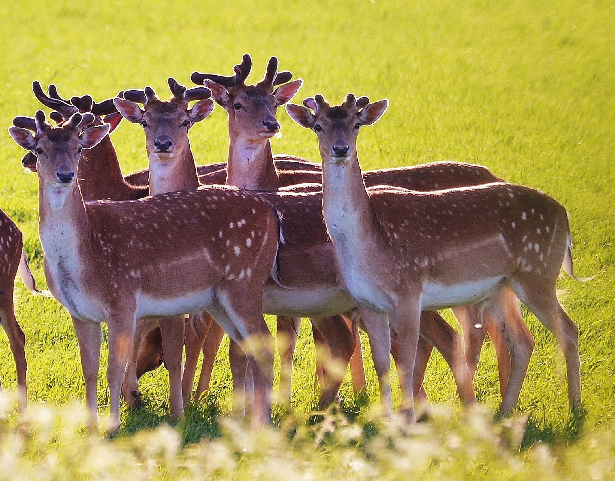 The Deer family 2. by Per Göthe