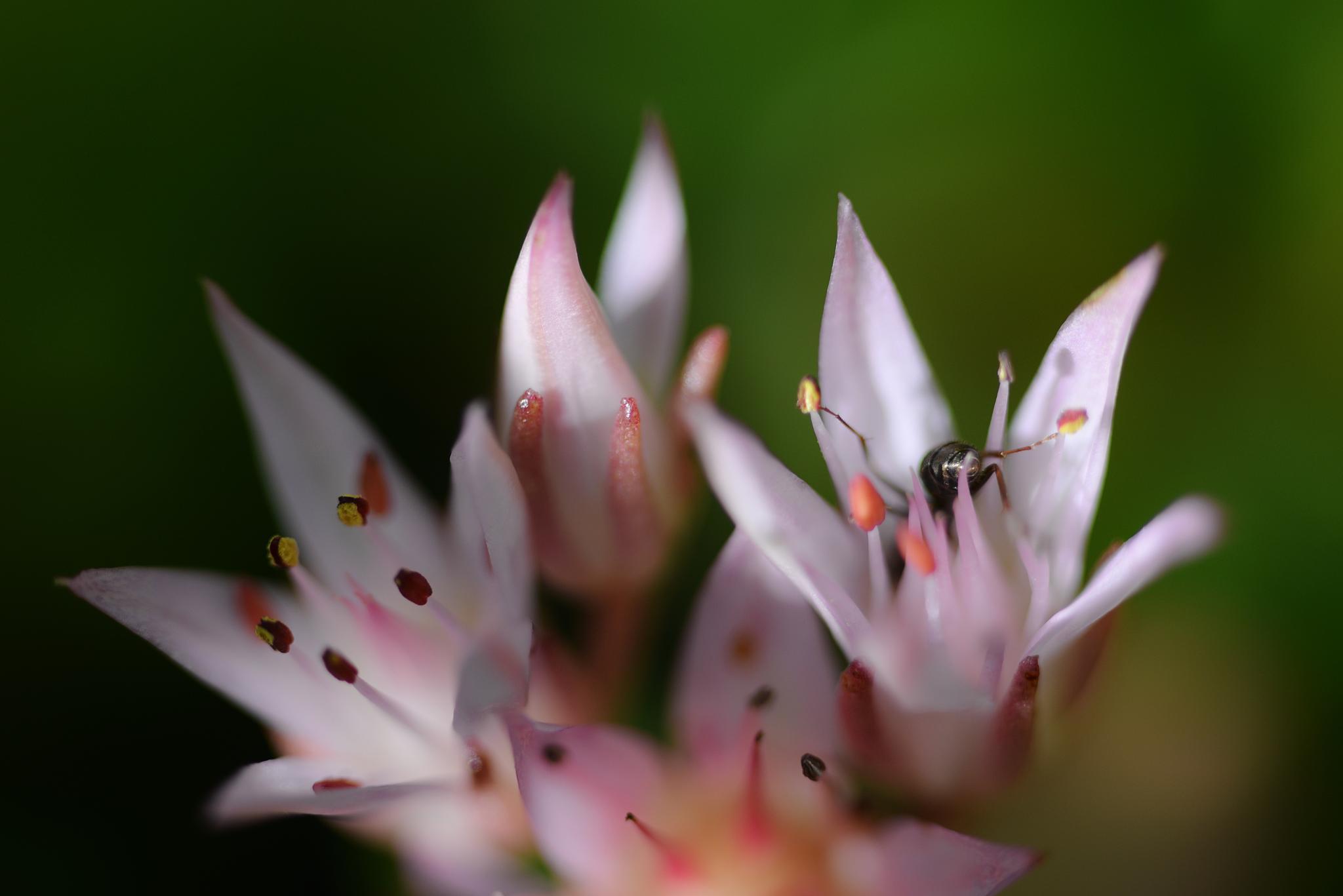 Miniflowers by Per Göthe