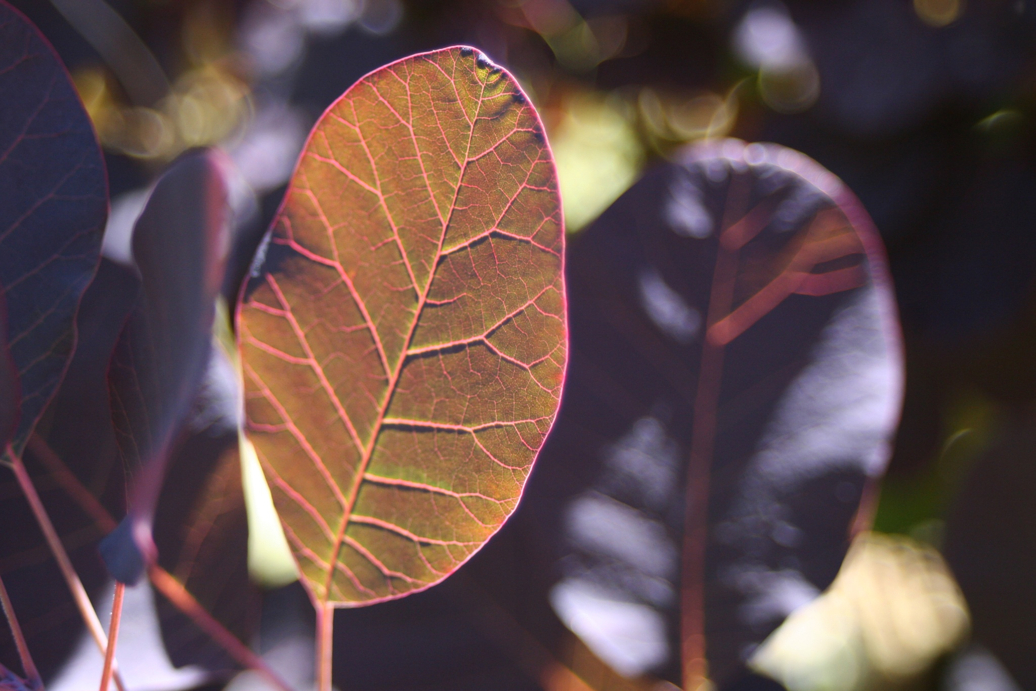 Sunlit Leaves by *Sirena Photography* LYB