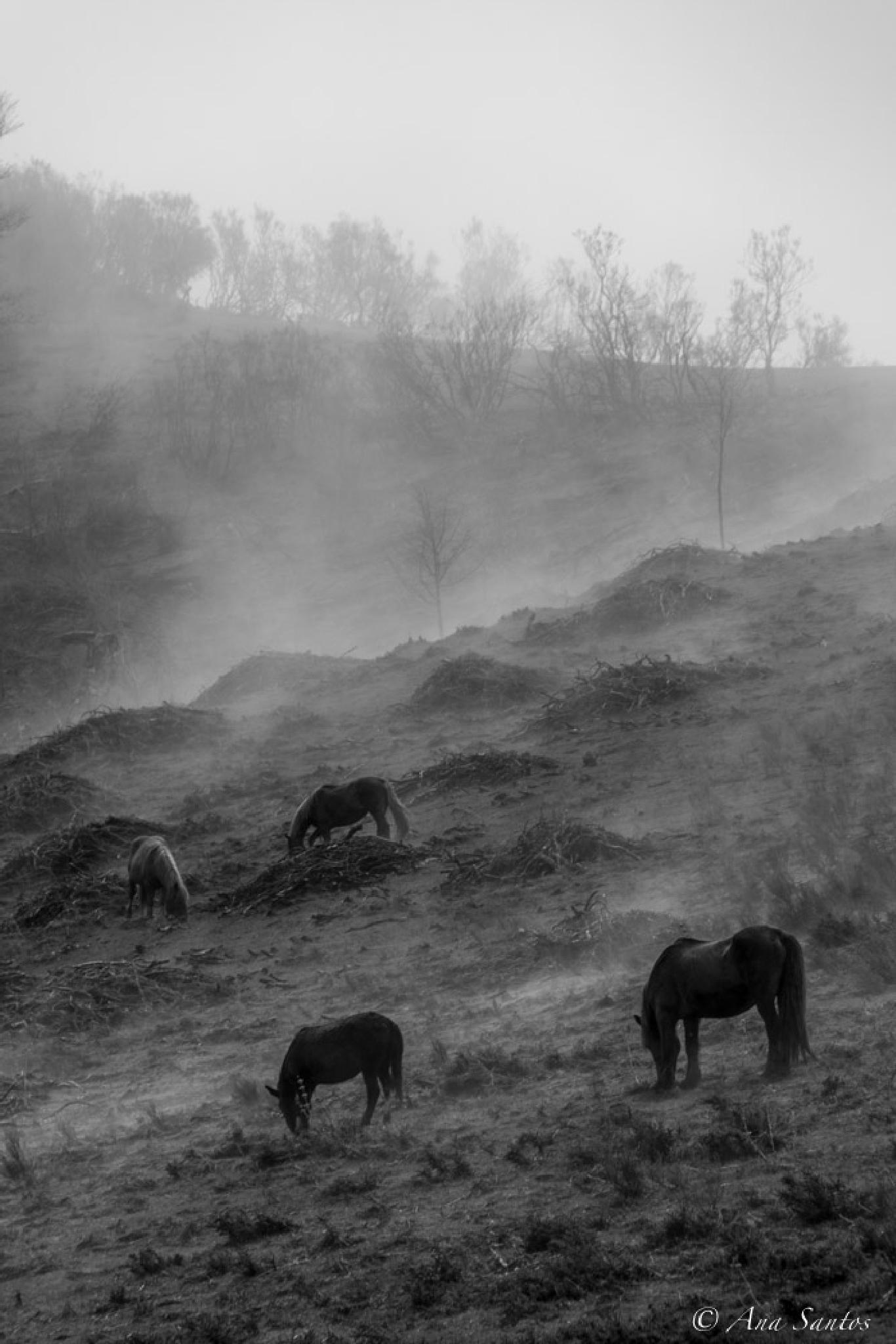 Photo in Black and White #b&w #fog #landsacape #animals