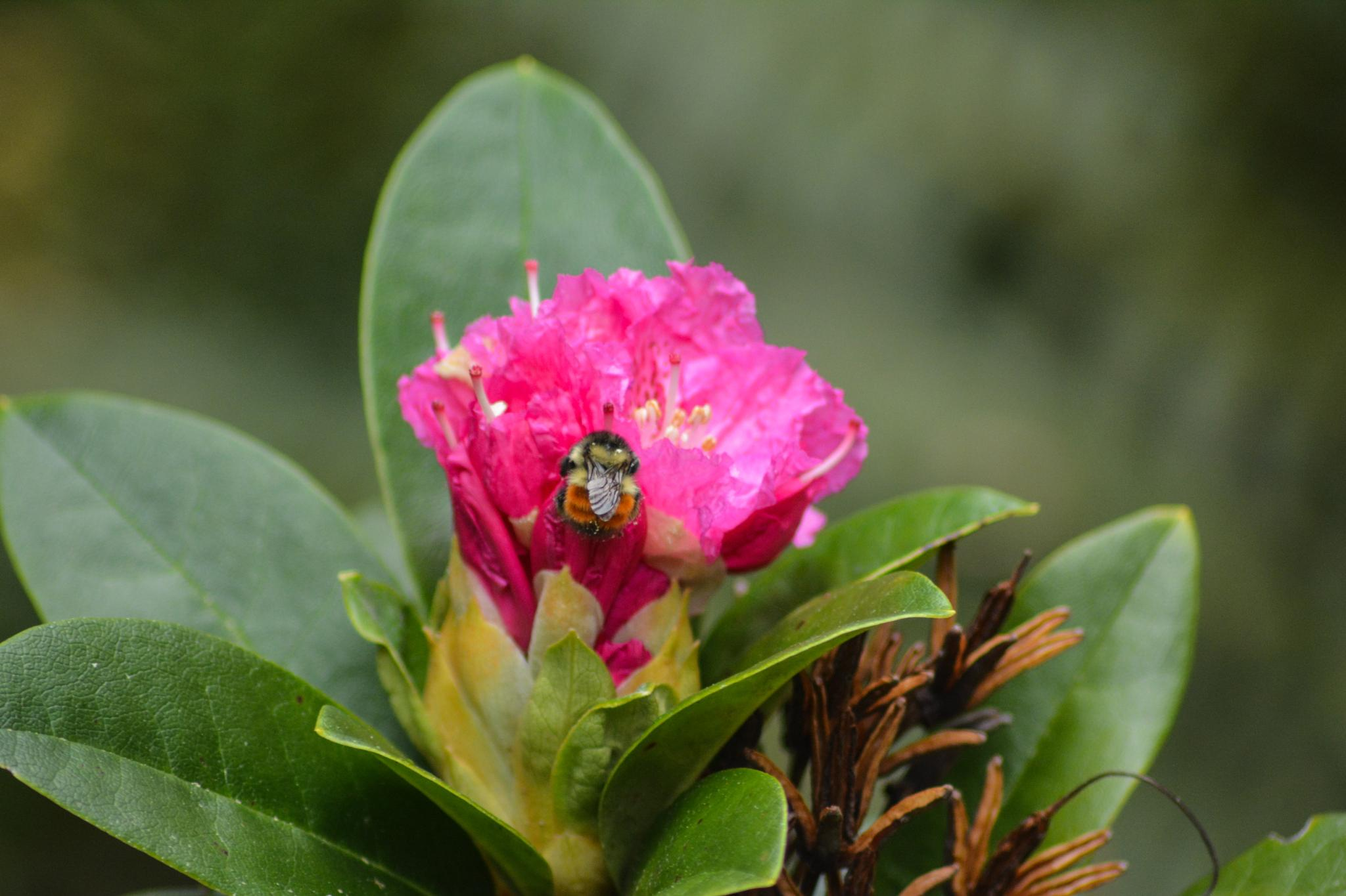 Busy Bumblebee by jan.noblitt