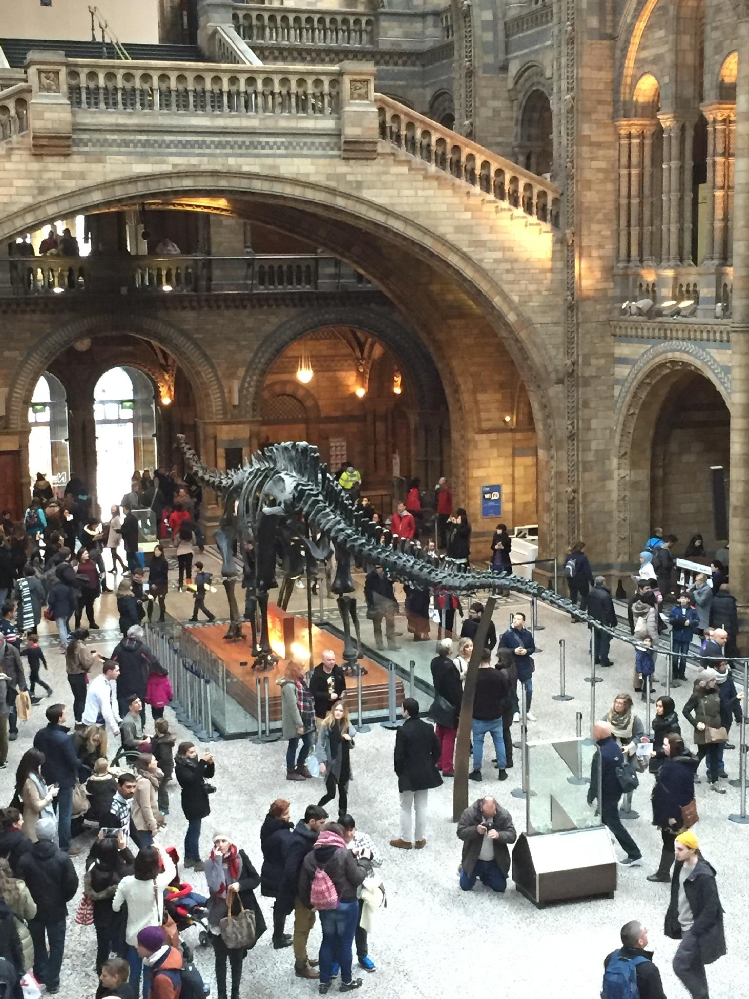 Natural History museum  by Joe Lane