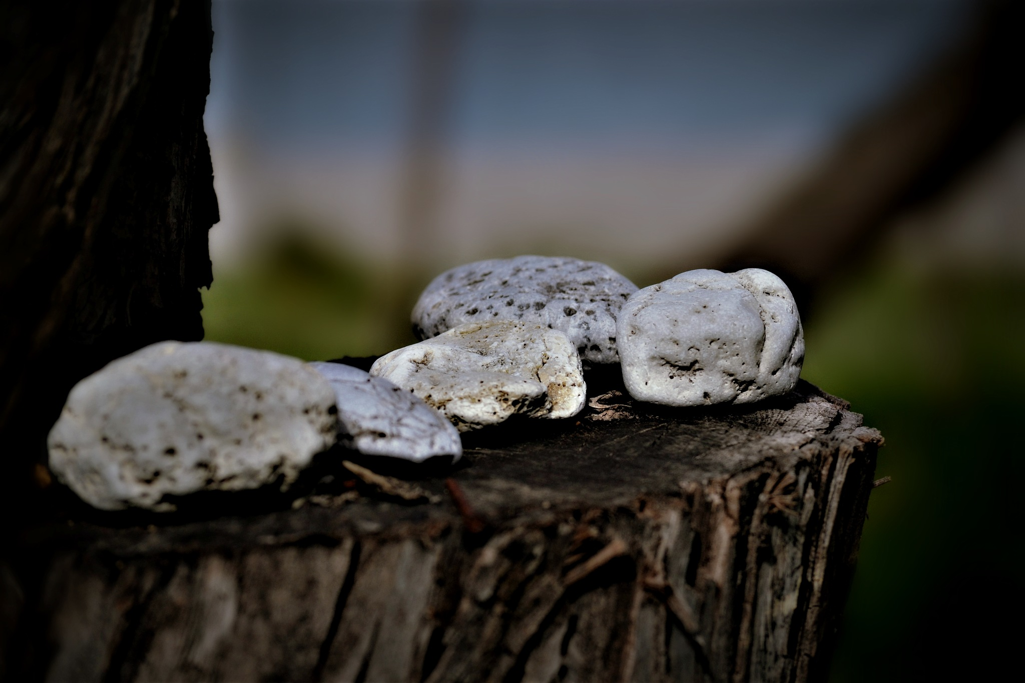 And the stones.. needs rest :D by angeliki