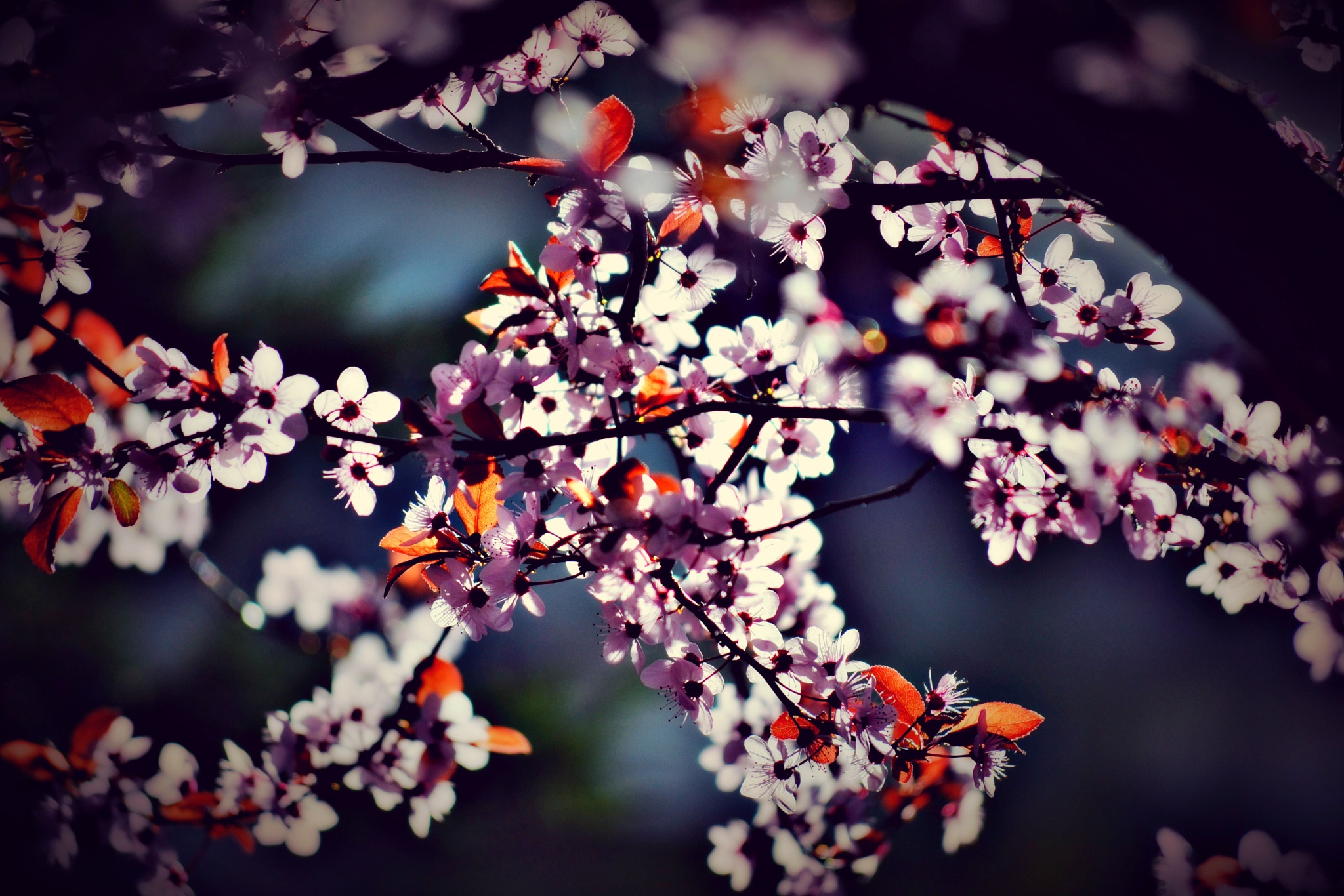 ..everything blooms..♥ by angeliki