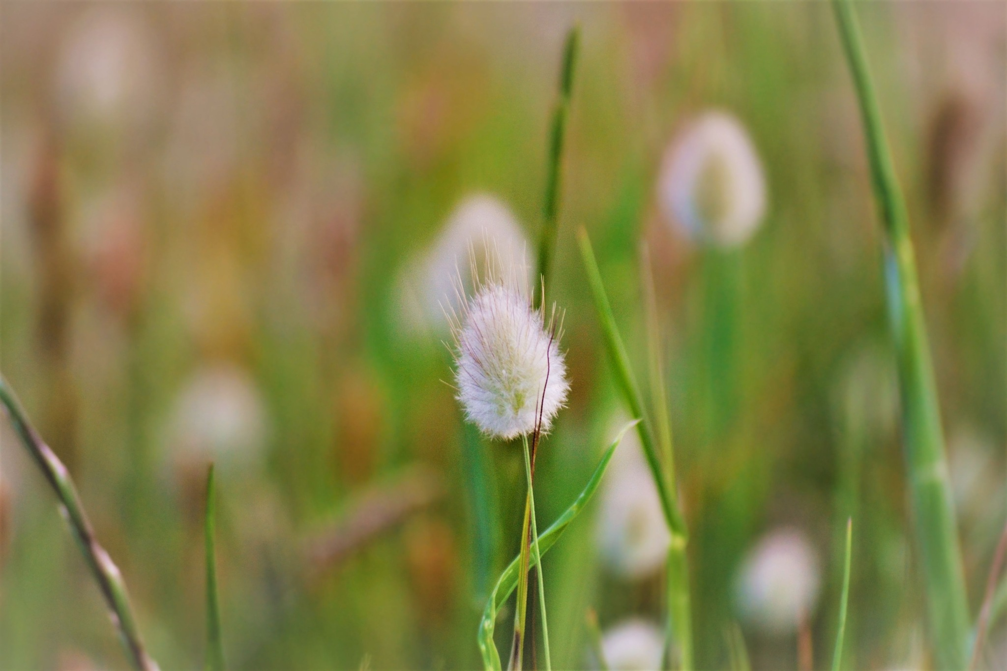 ..bunny tail.. by angeliki