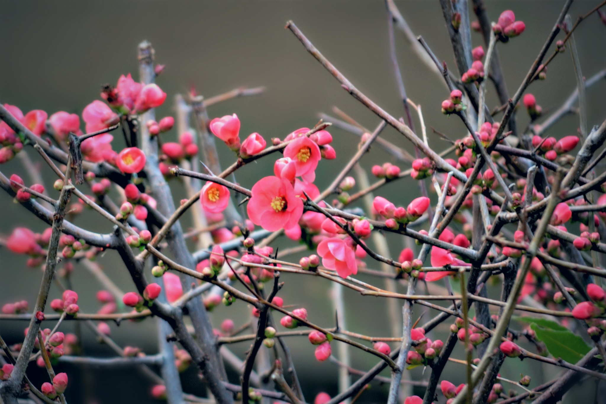 ~spring is coming~ by angeliki