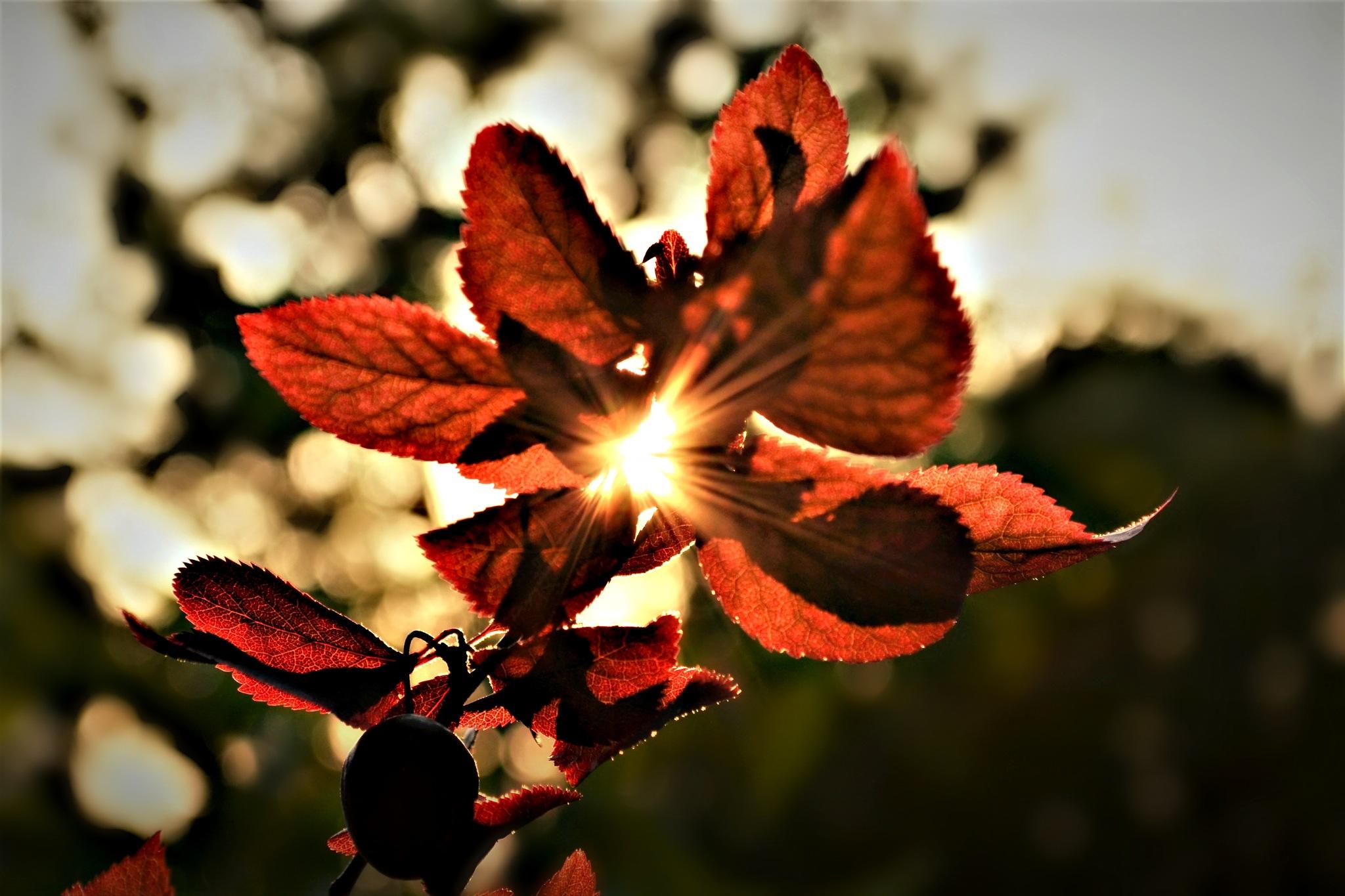 ..leaves...me~ by angeliki