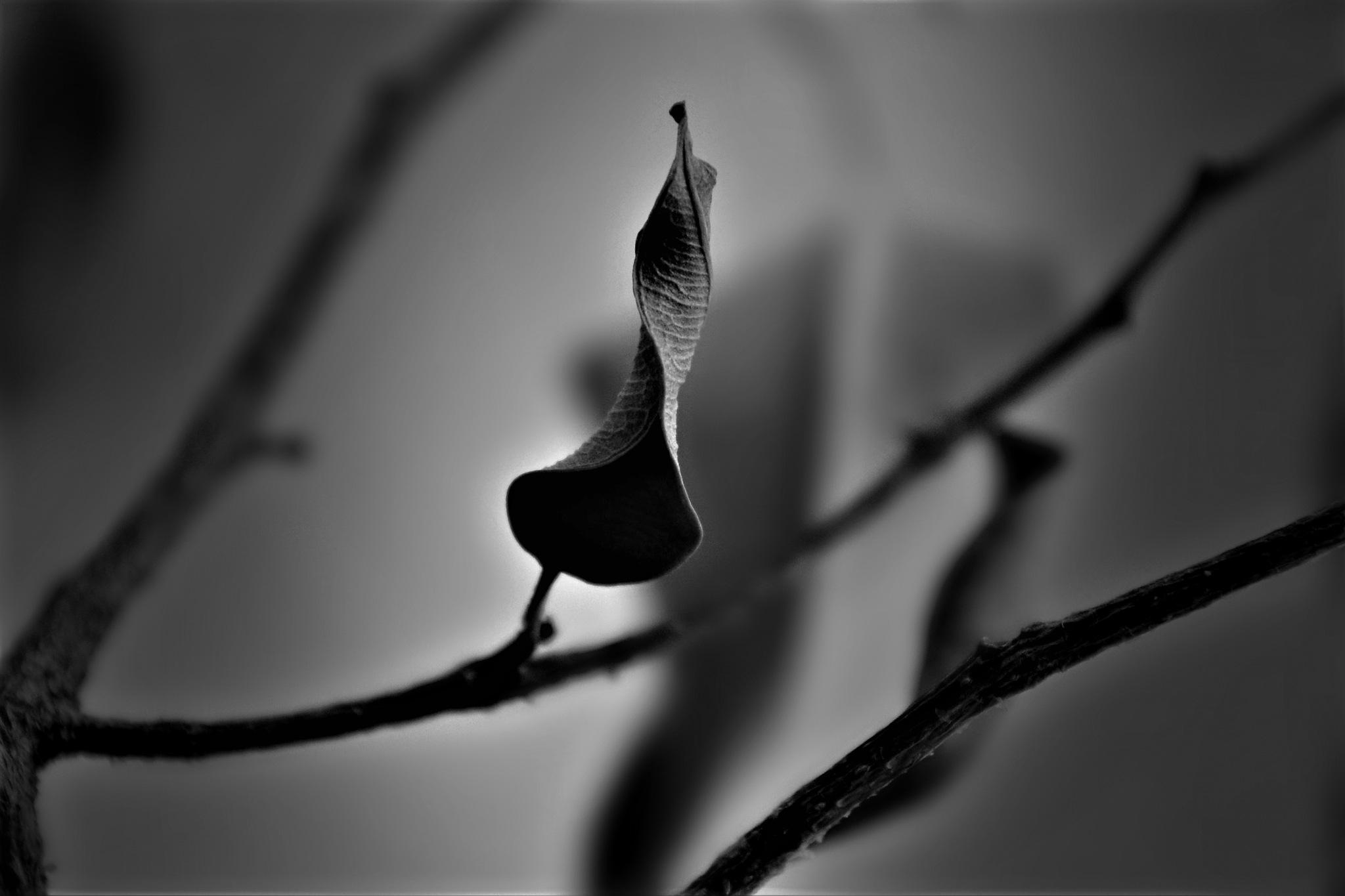 ..swirl leaf..:-) by angeliki