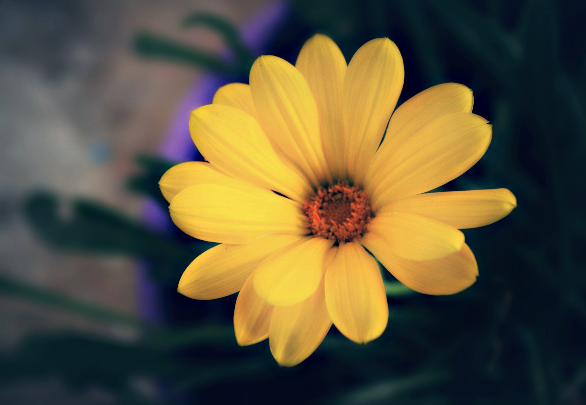 ..daisy.. by angeliki