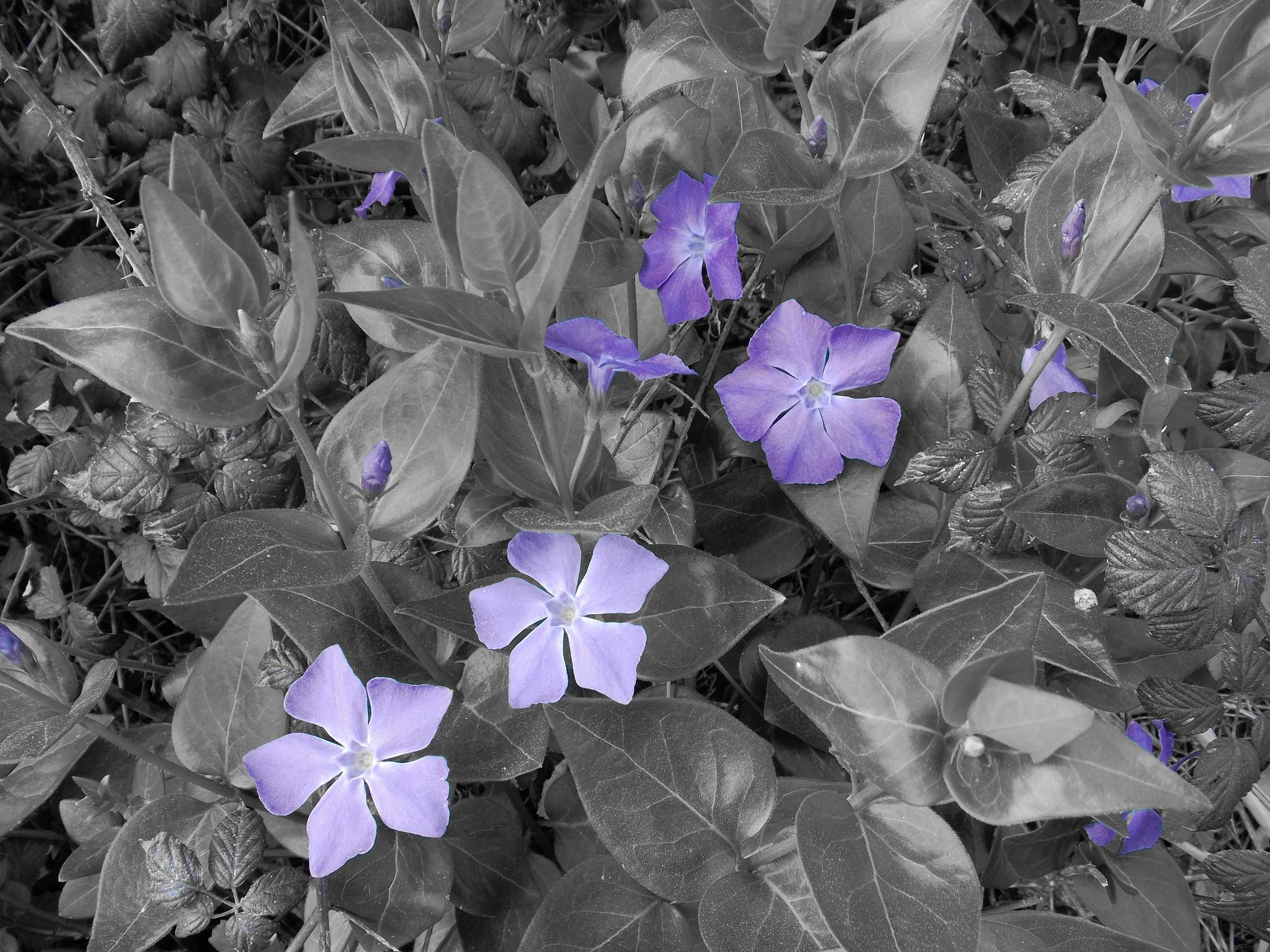 Violeta by joserafael.santamariaruiz
