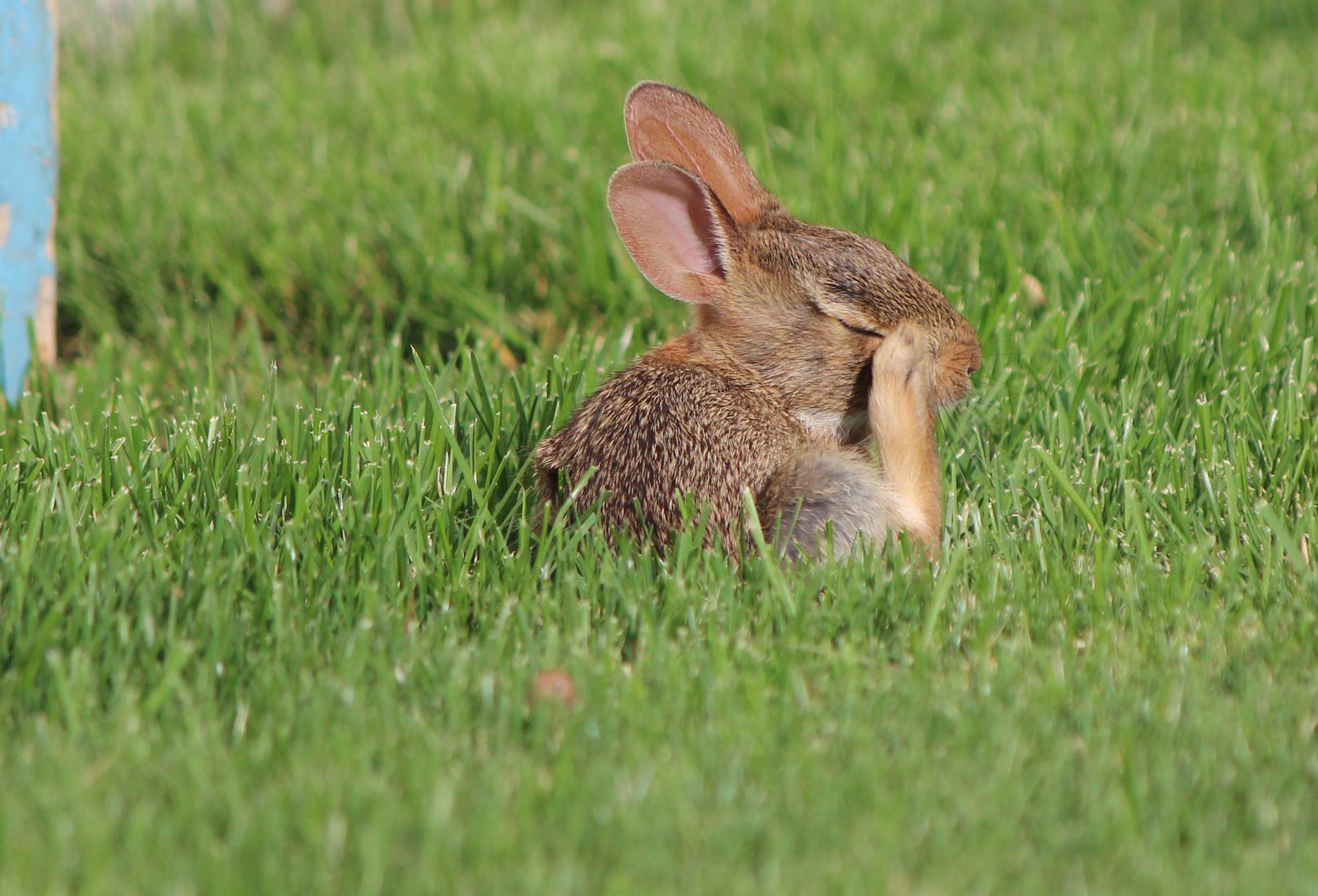 Baby Bunny by tonia.turner.31