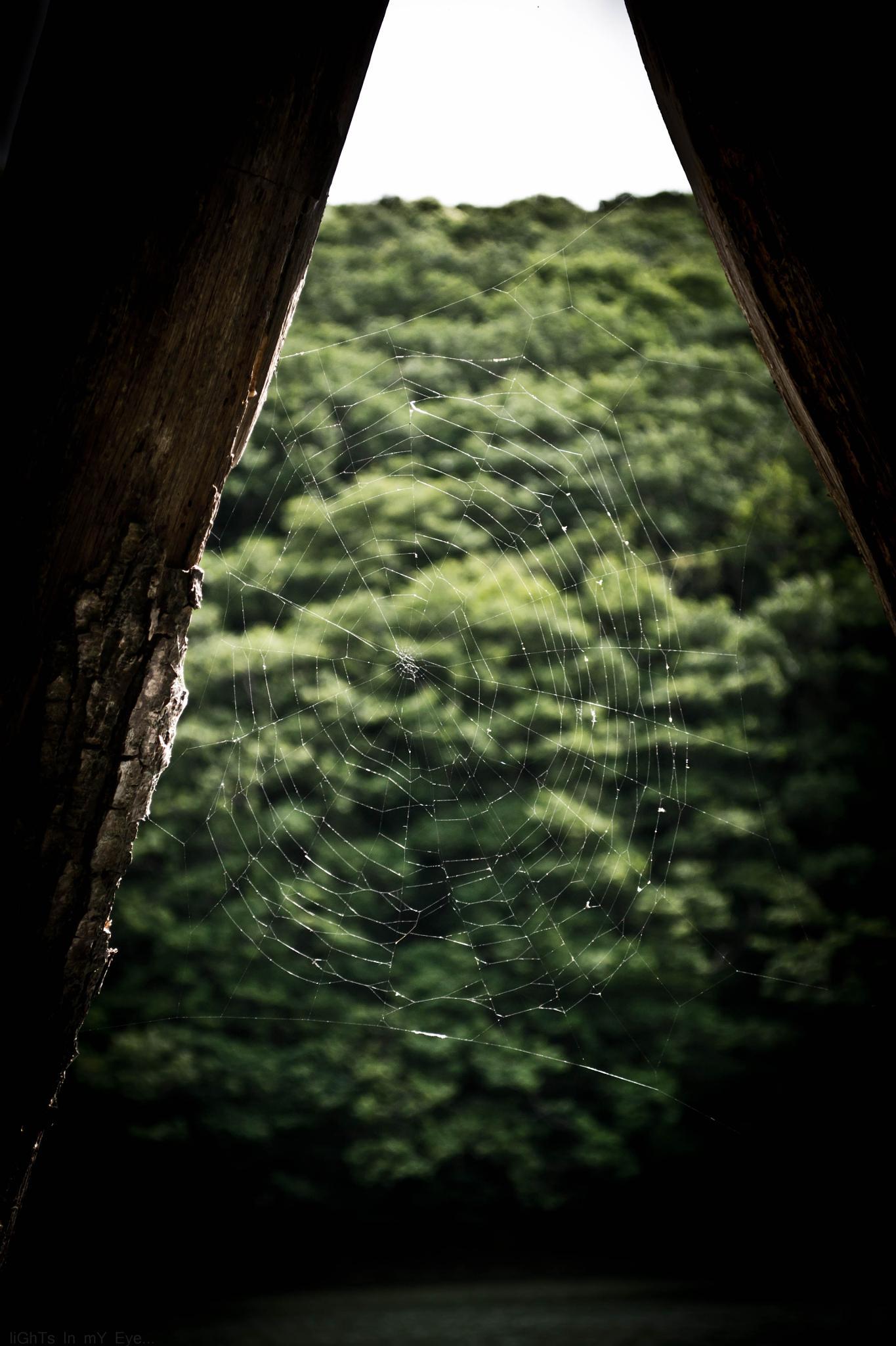 tree web !!.. by neil.hickman1