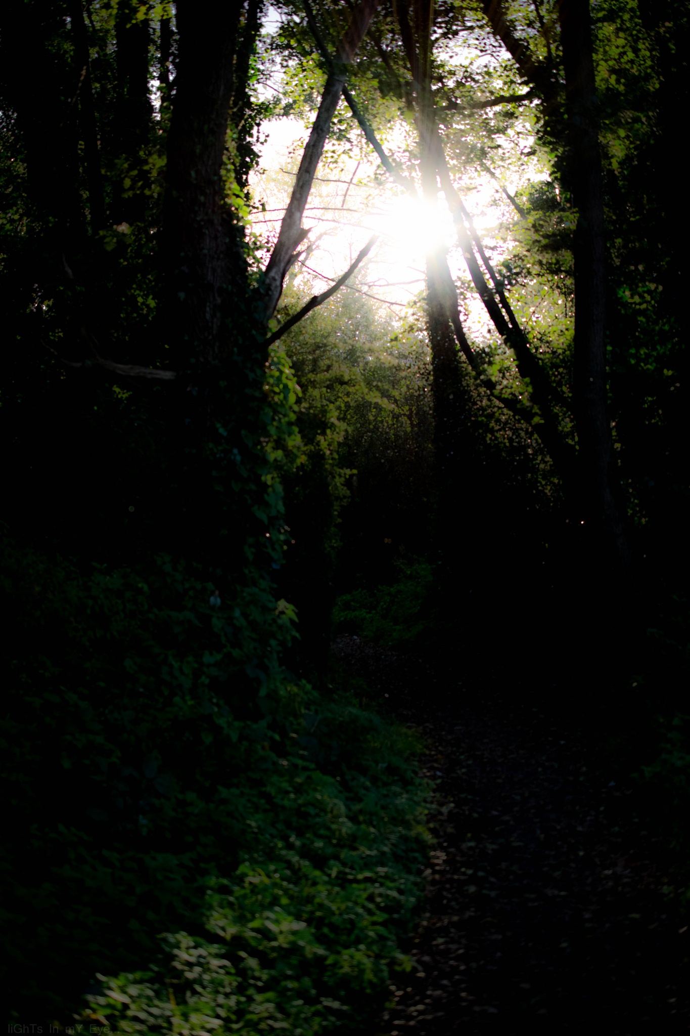 evening shine... by neil.hickman1