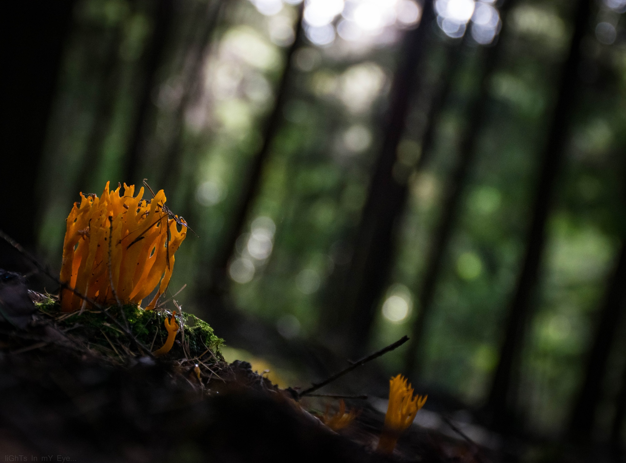 Fungus...  by neil.hickman1