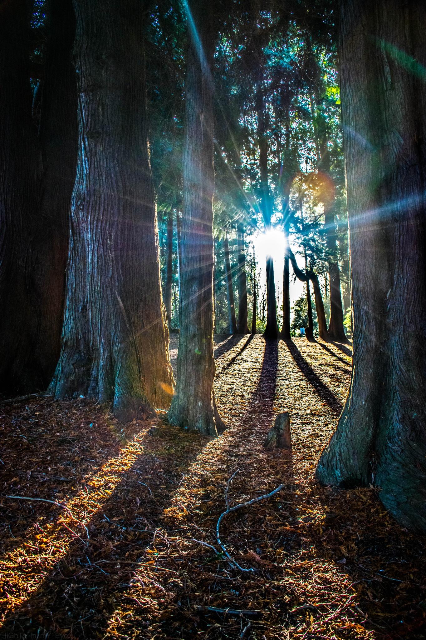 light magic... by neil.hickman1