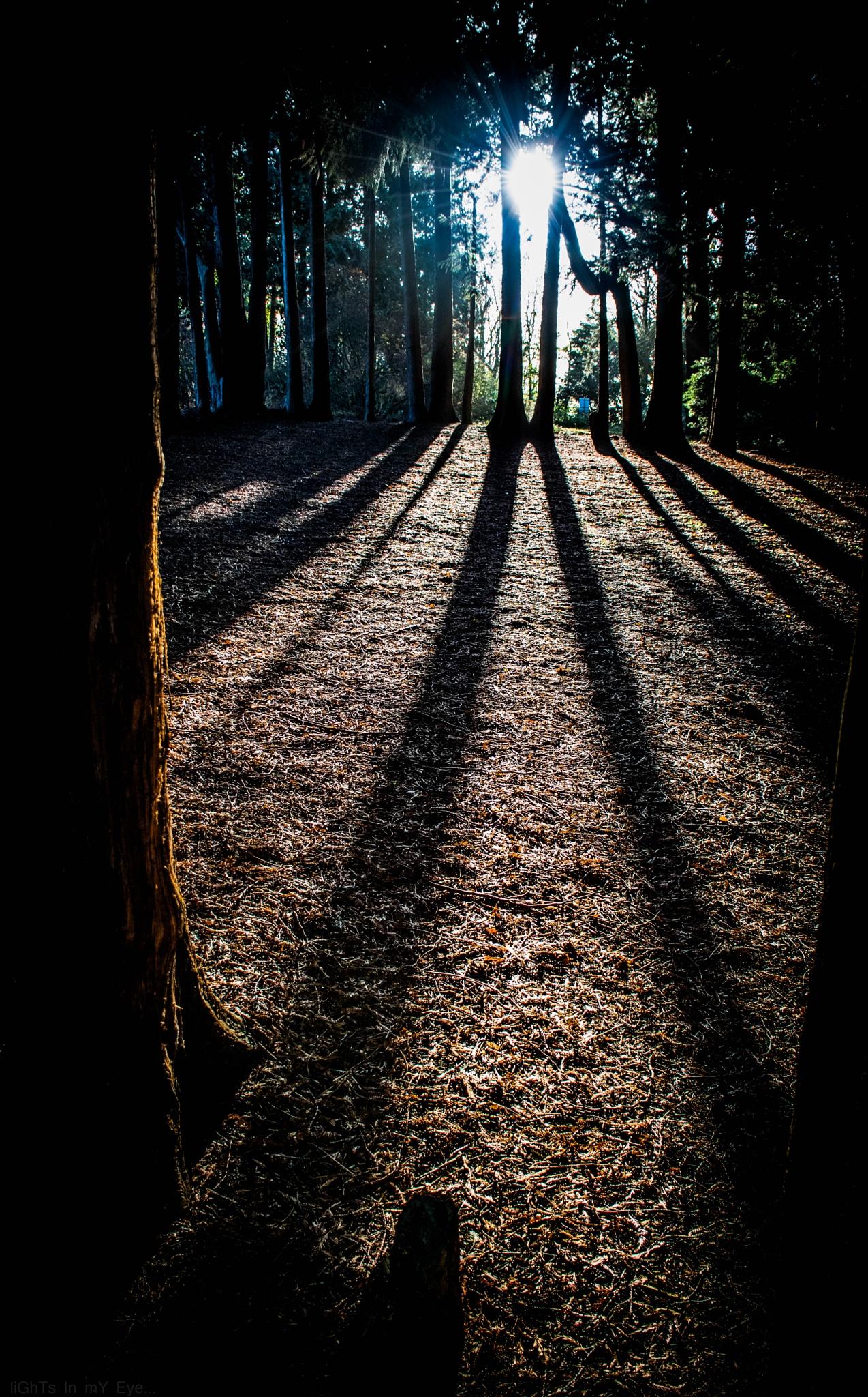 light between.. by neil.hickman1