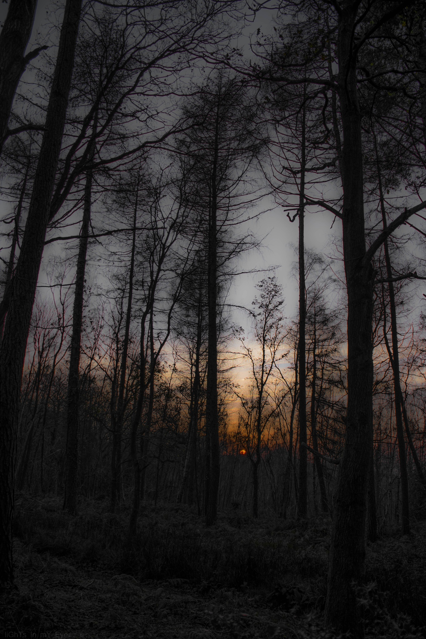 dusk wood by neil.hickman1