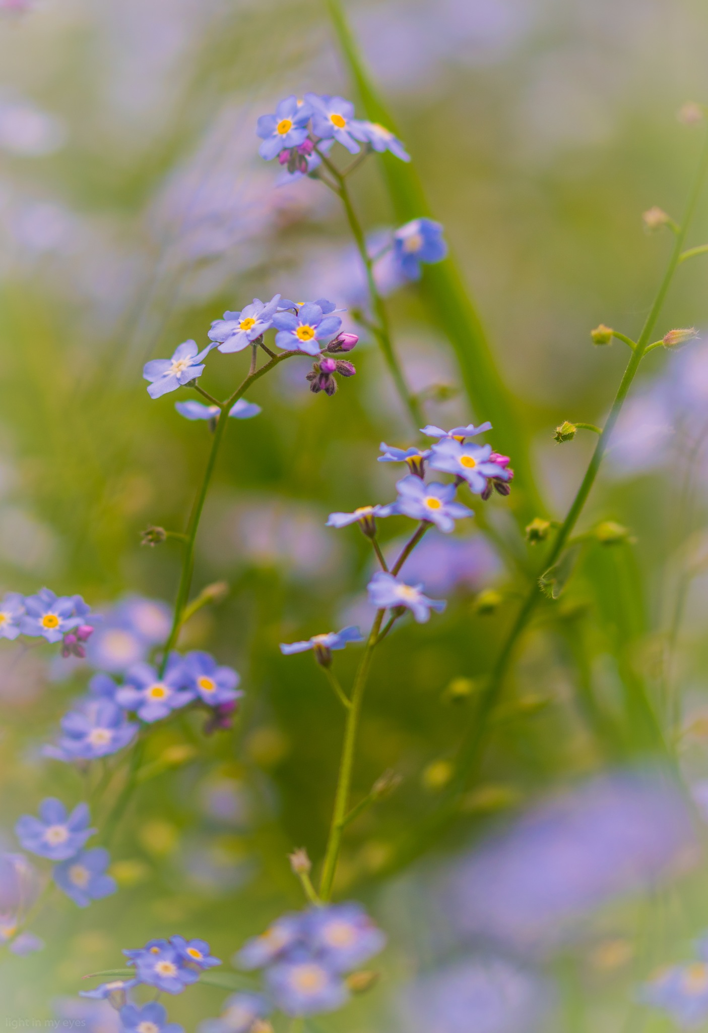 forgetmenot by neil.hickman1