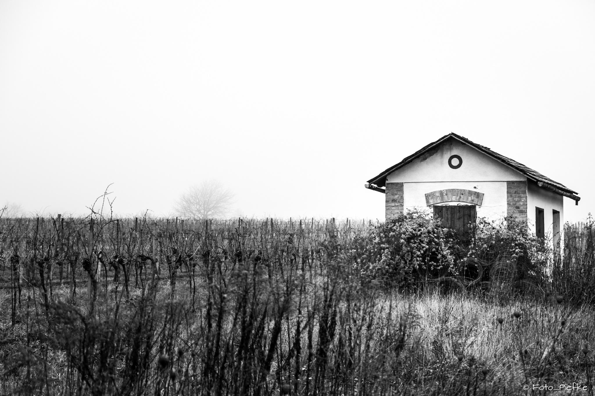 Hut in Vienna's wineyards by foto_piefke