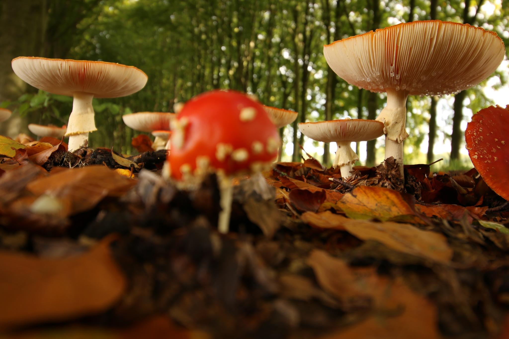 Mushroom by Eddie