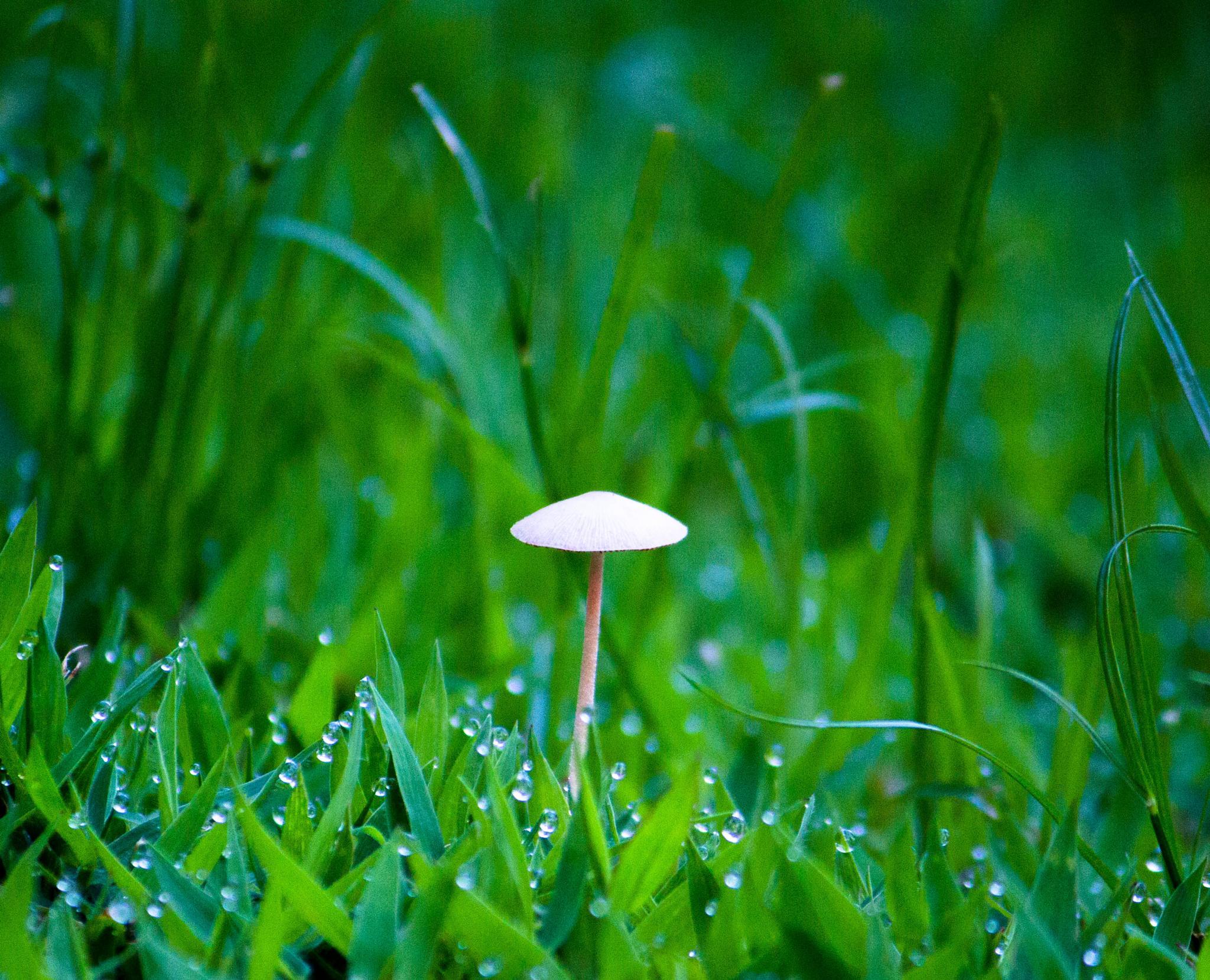 Backyard mushroom by ada.varona