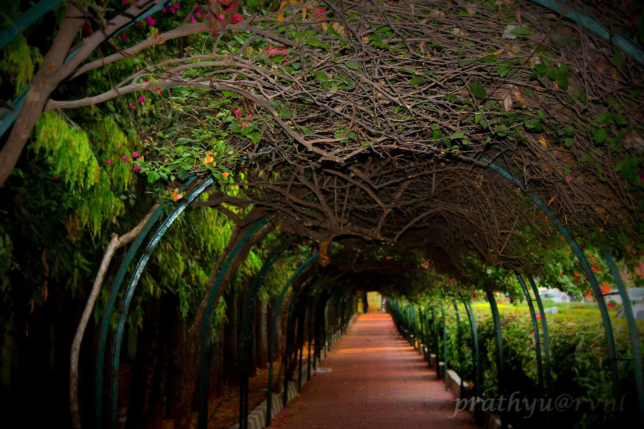 Photo in Nature #garden #photography #nature #archway #lalbagh #canon