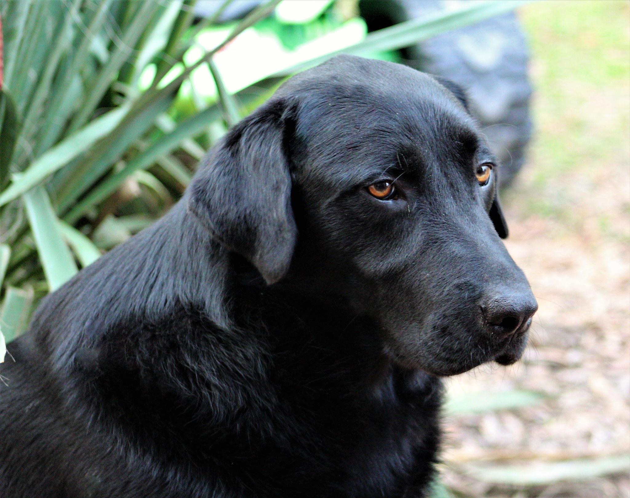 Vader aka Black Dog by cindi.lucas.7